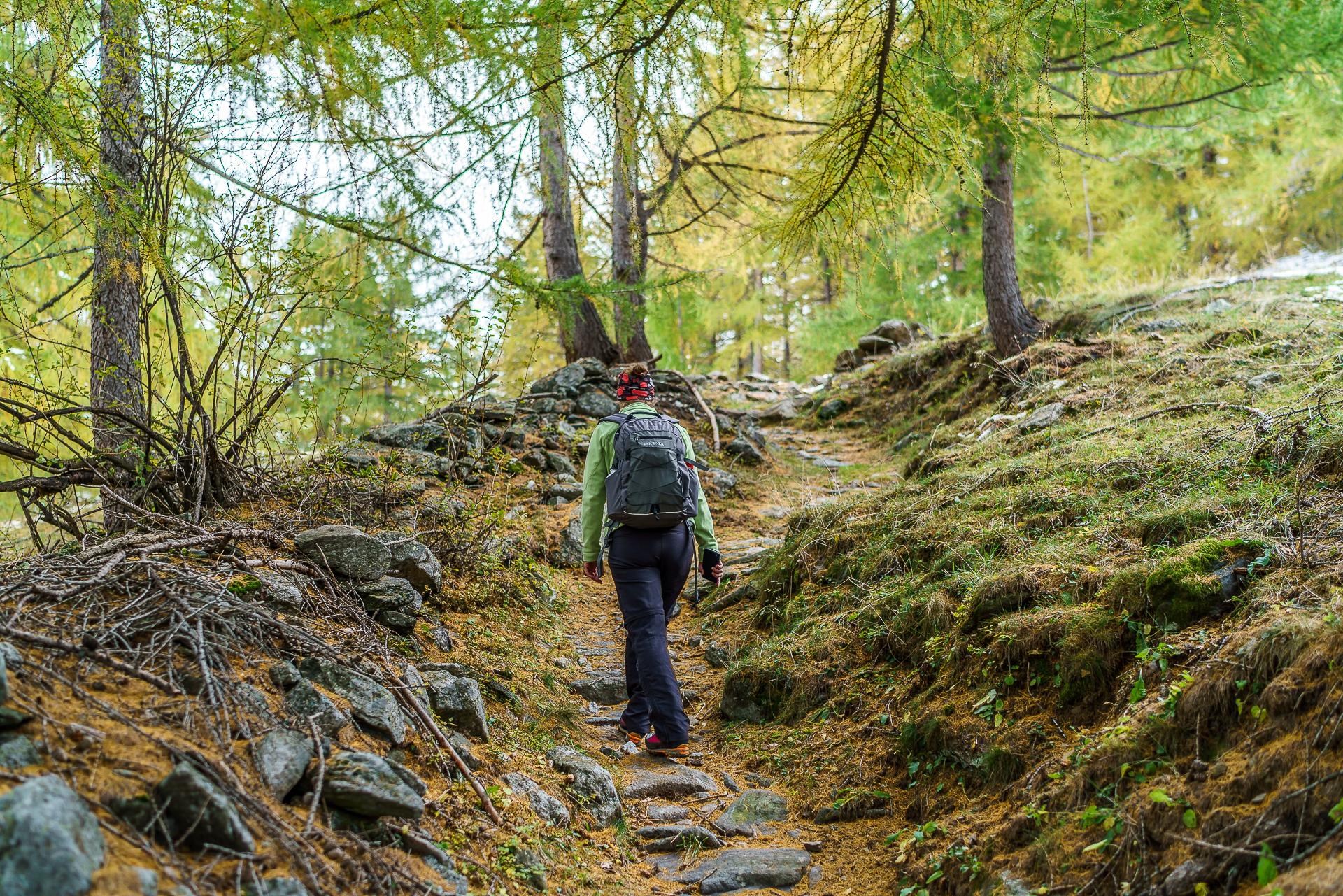 Wanderung-Laerchenwald-Simplon