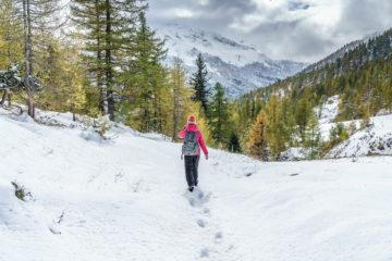 Indian Summer im Simplongebiet - Wanderung im Lärchenwald