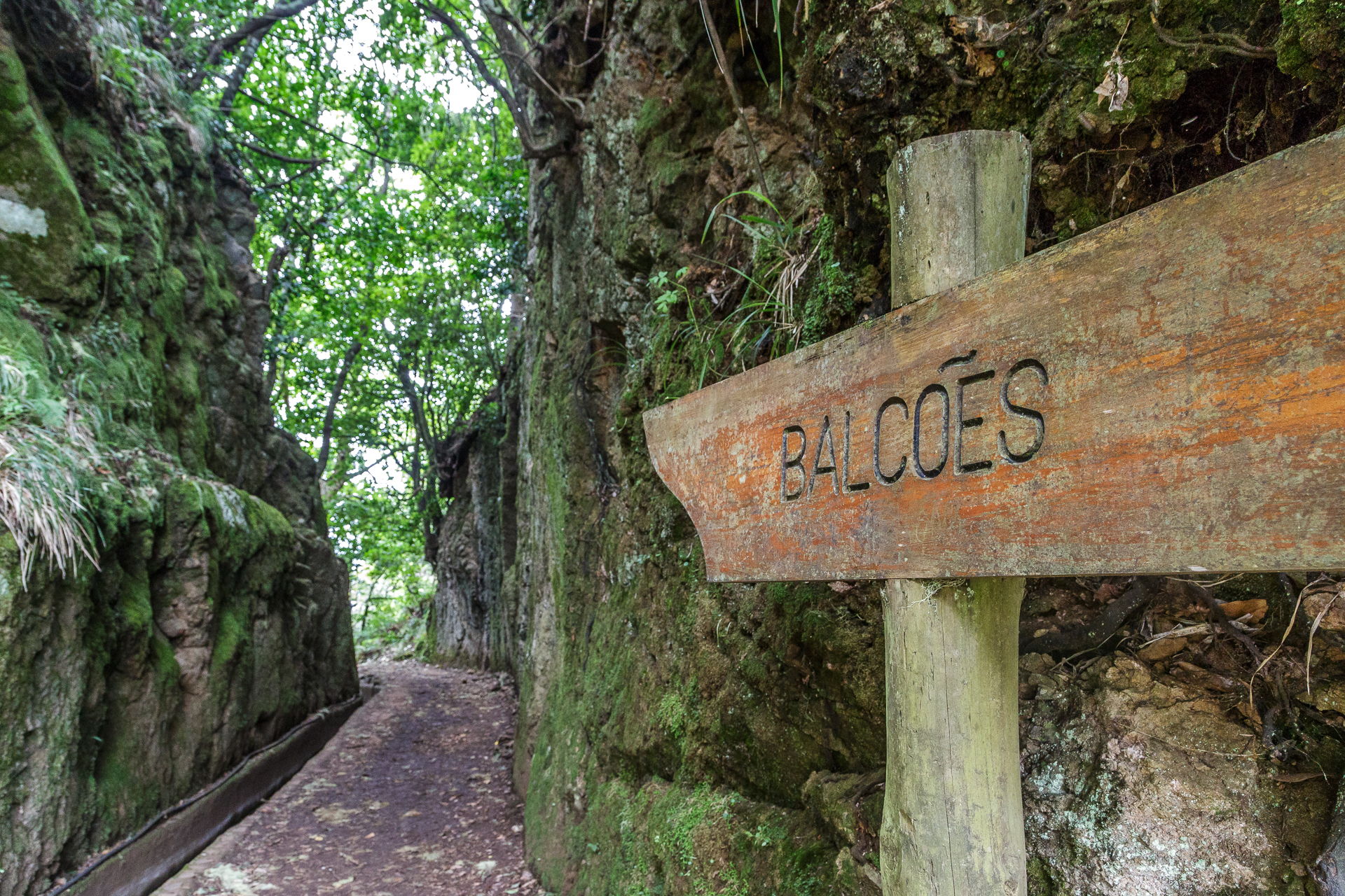 madeira-ribeiro-frio-Wanderung-Balcoes