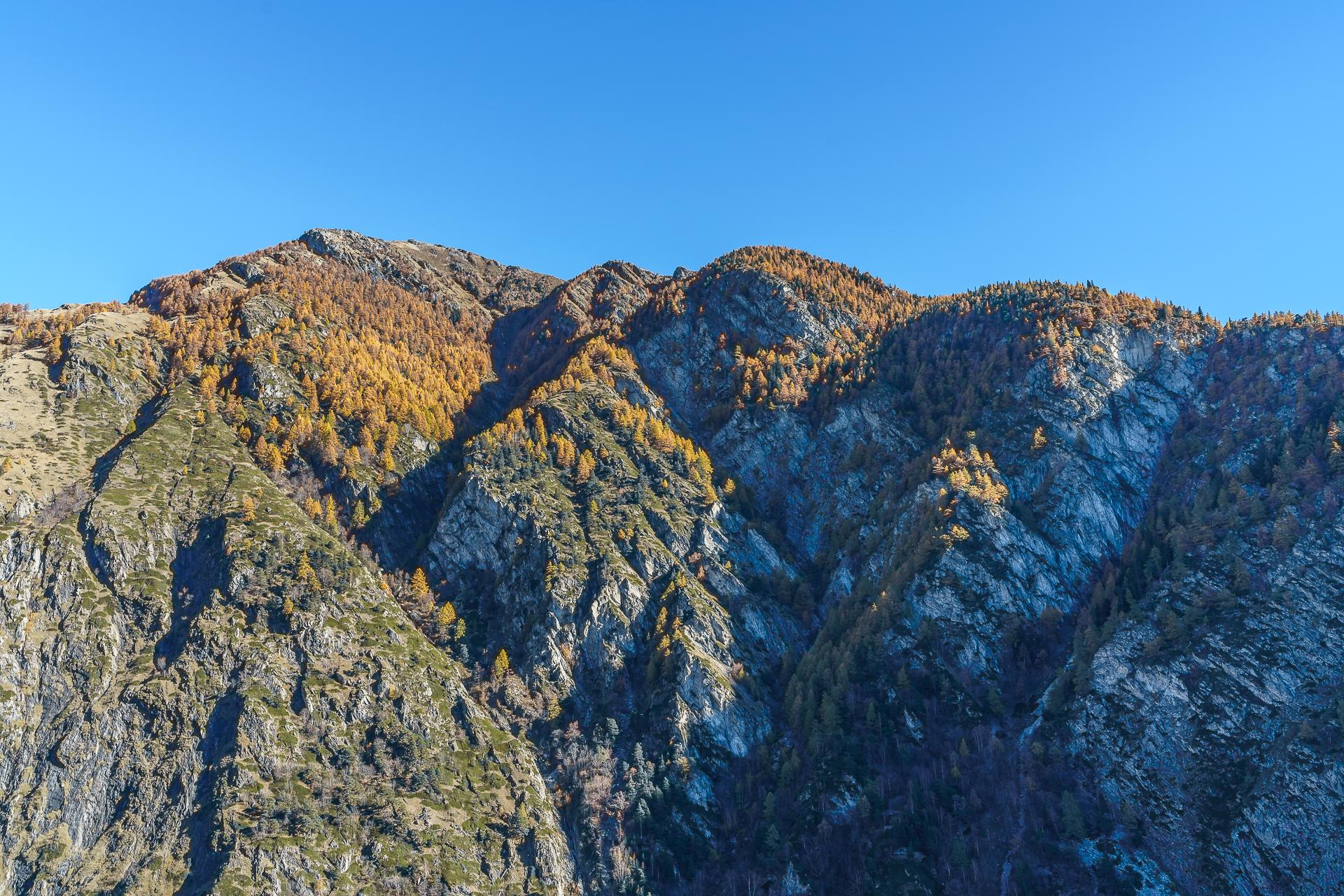 Herbst-Wallis
