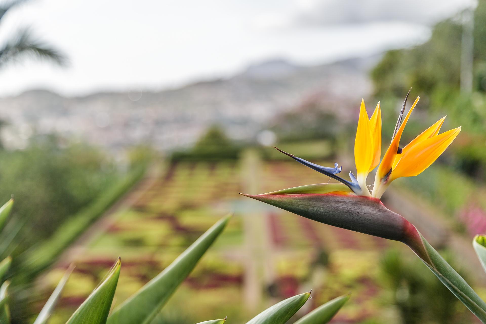 Jardim-Botanico-Funchal-2