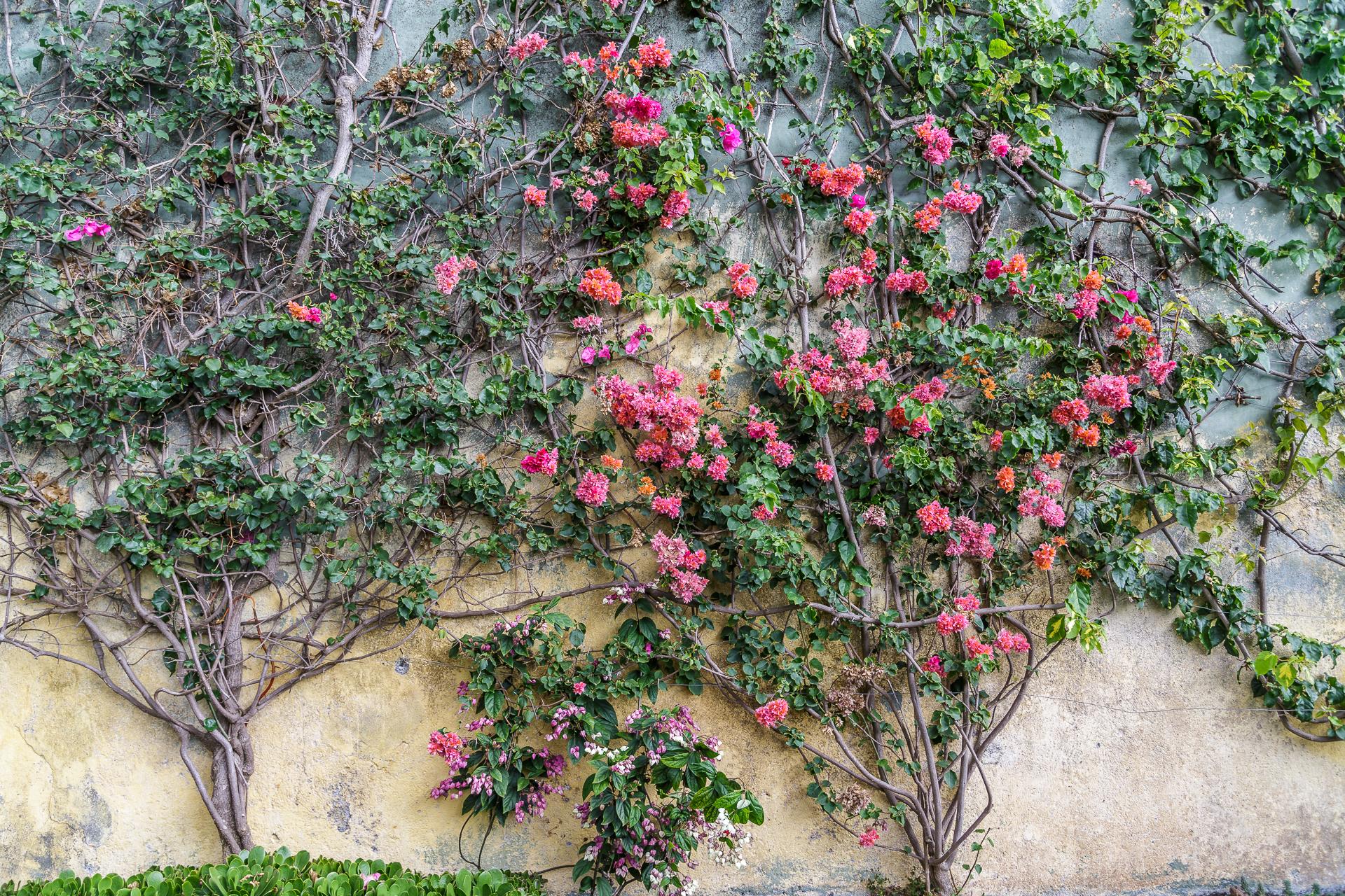 Jardim-Botanico-Funchal-3