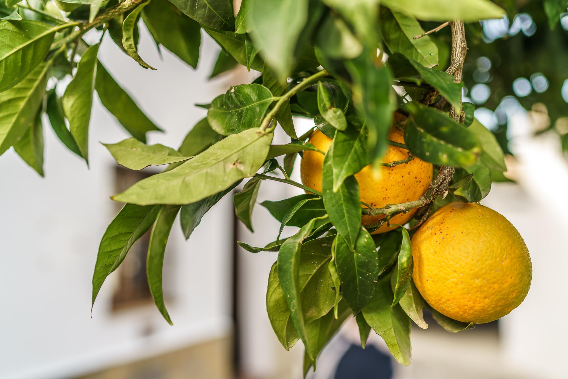 Orangen-Andalusien
