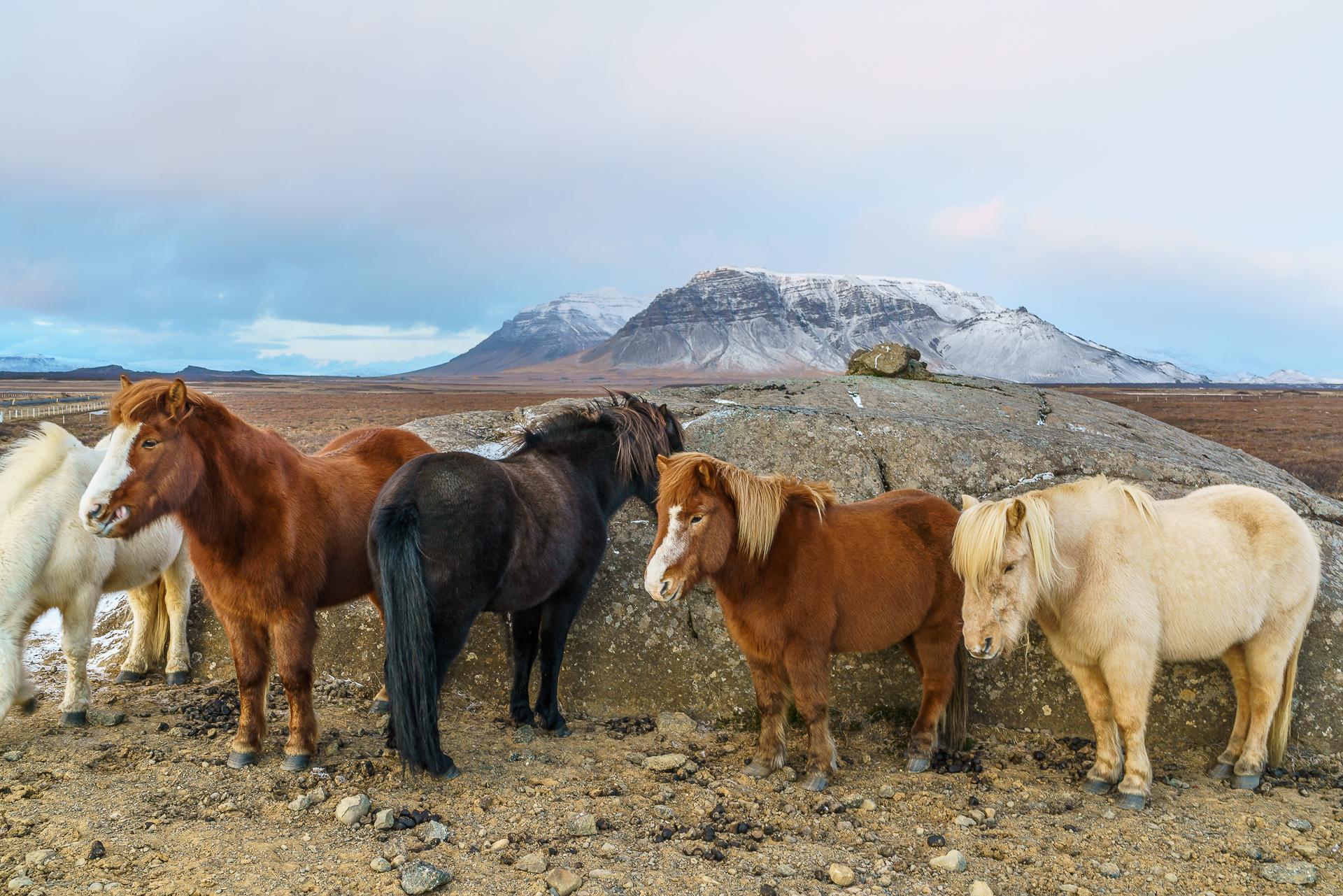 Isländer-snaefellsnes