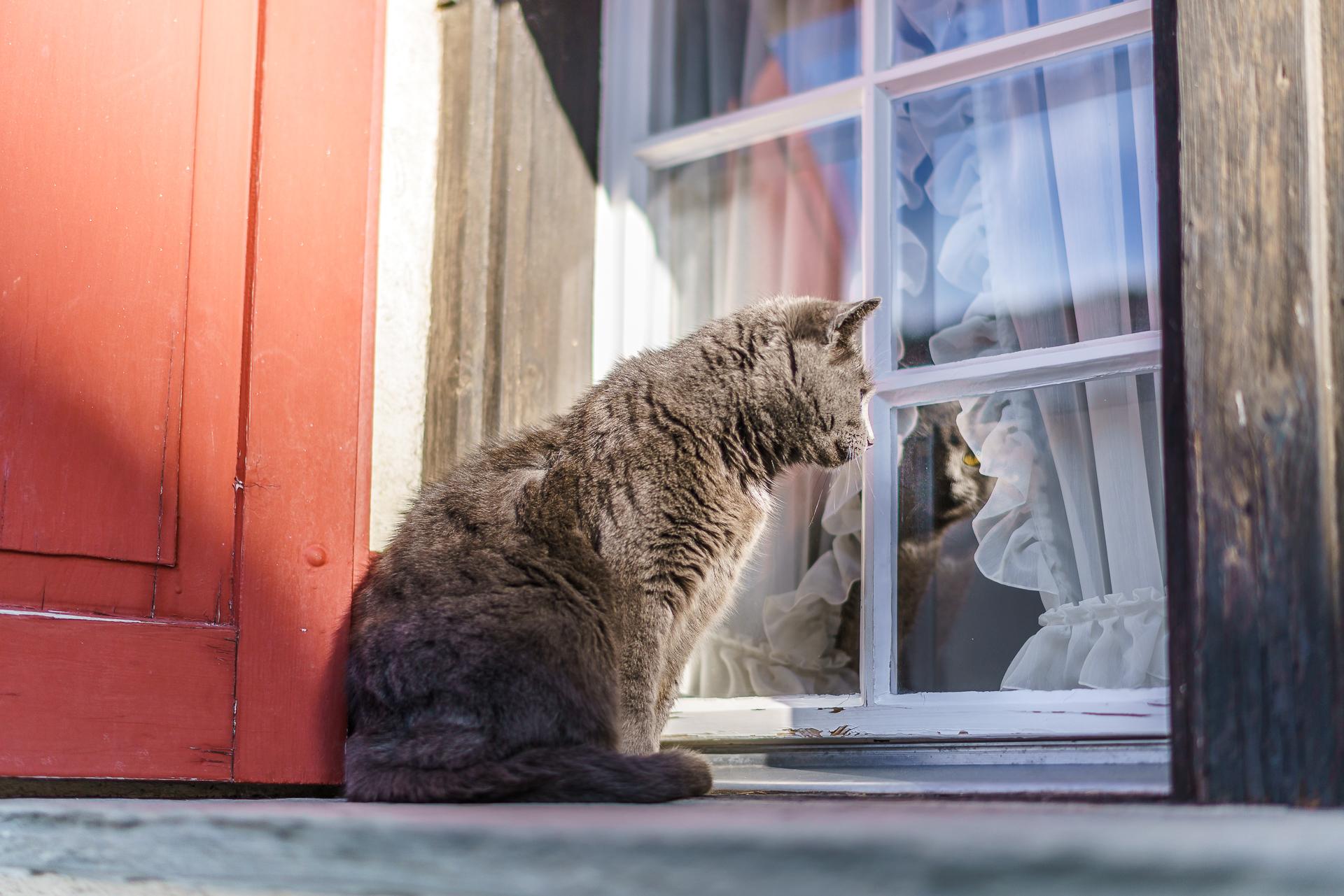 Katze-Vals-Graubuenden