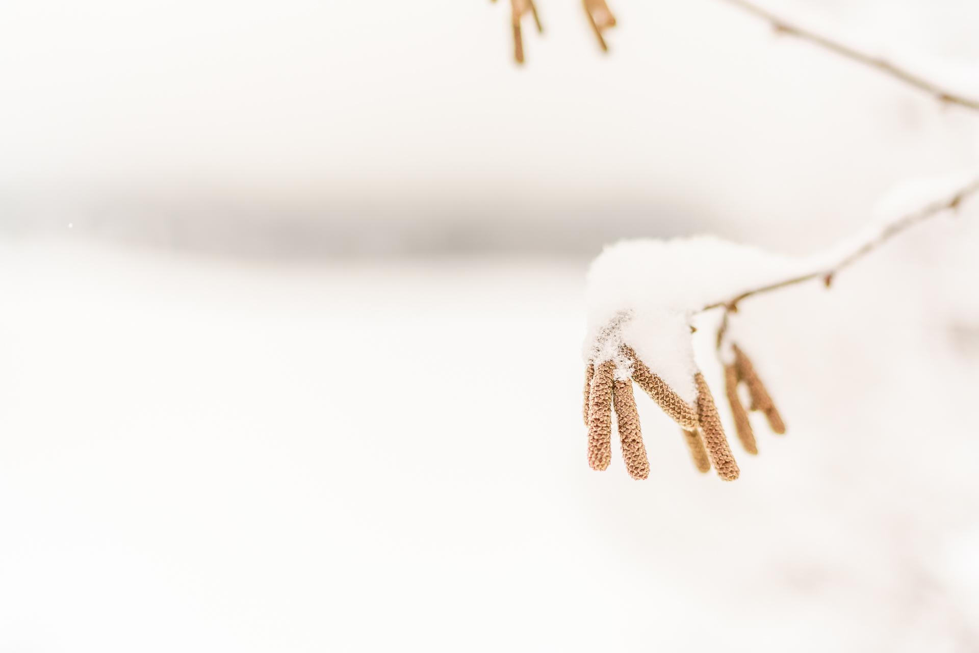 Natur-Winterschlaf