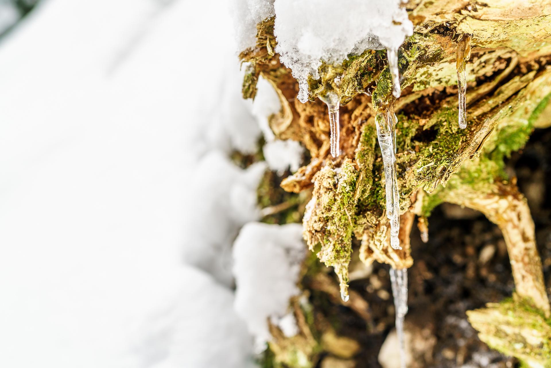 Eiszapfen-am-Moos