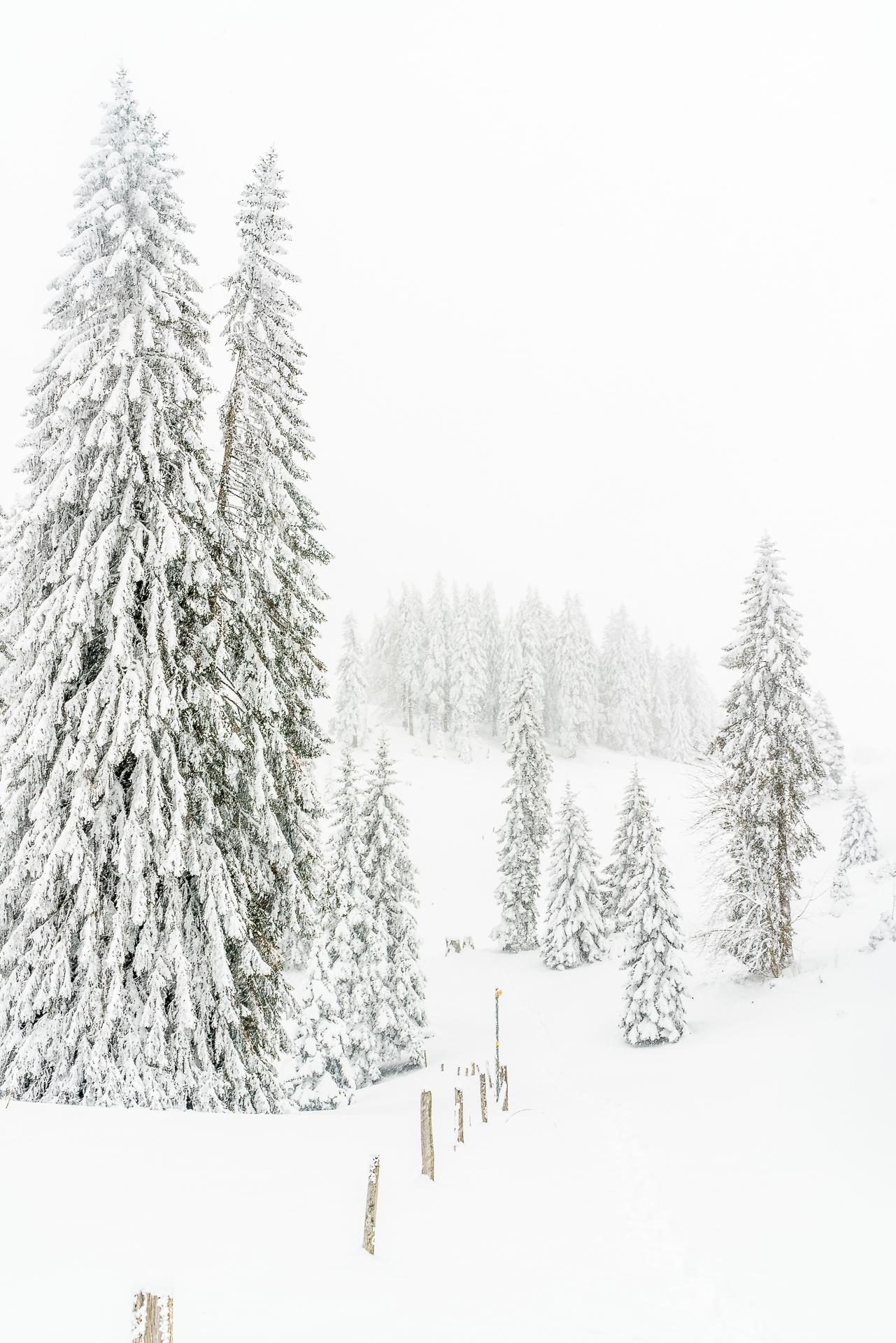 Jura-Tannen-Winterlandschaft