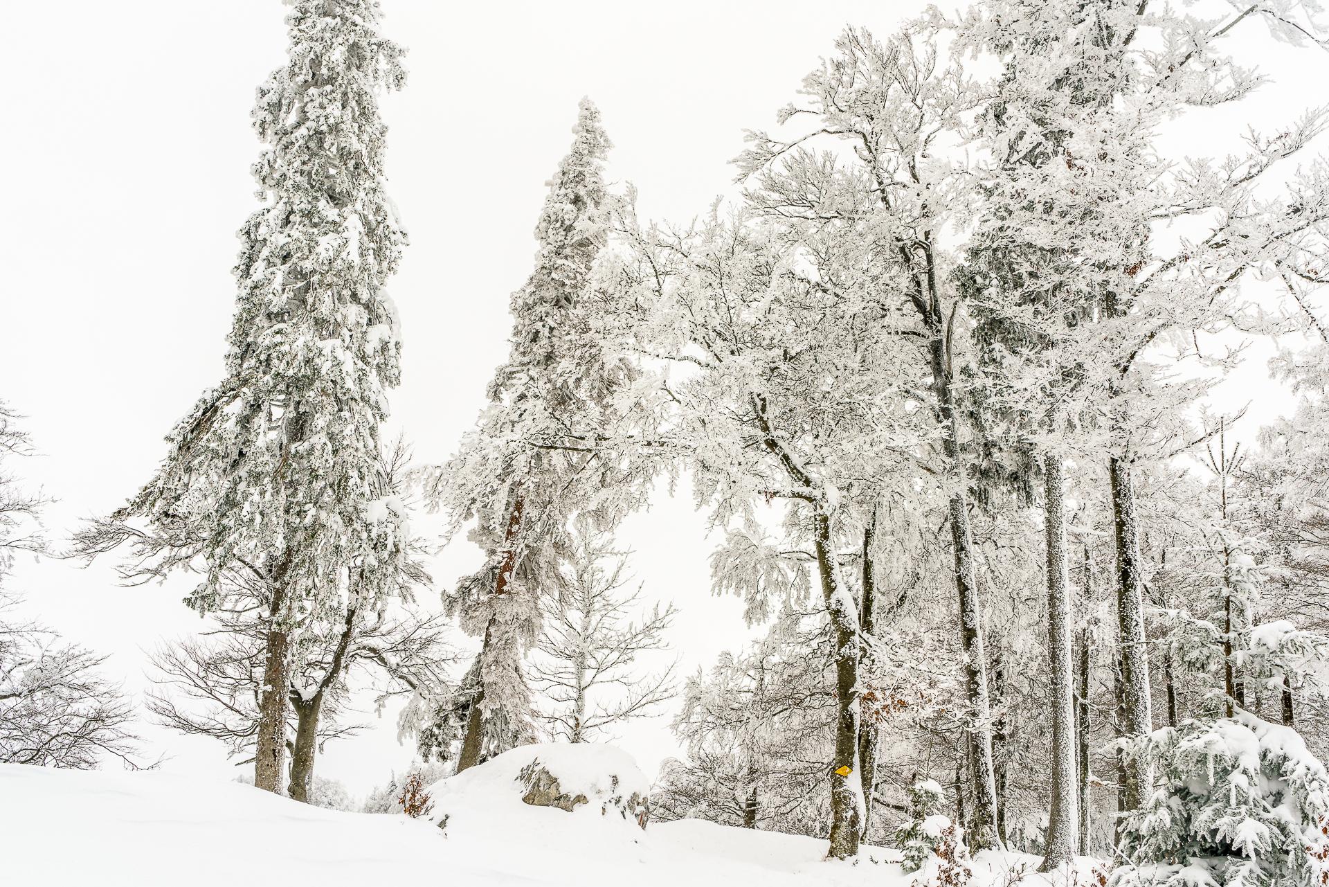 Jura-Winterlandschaft