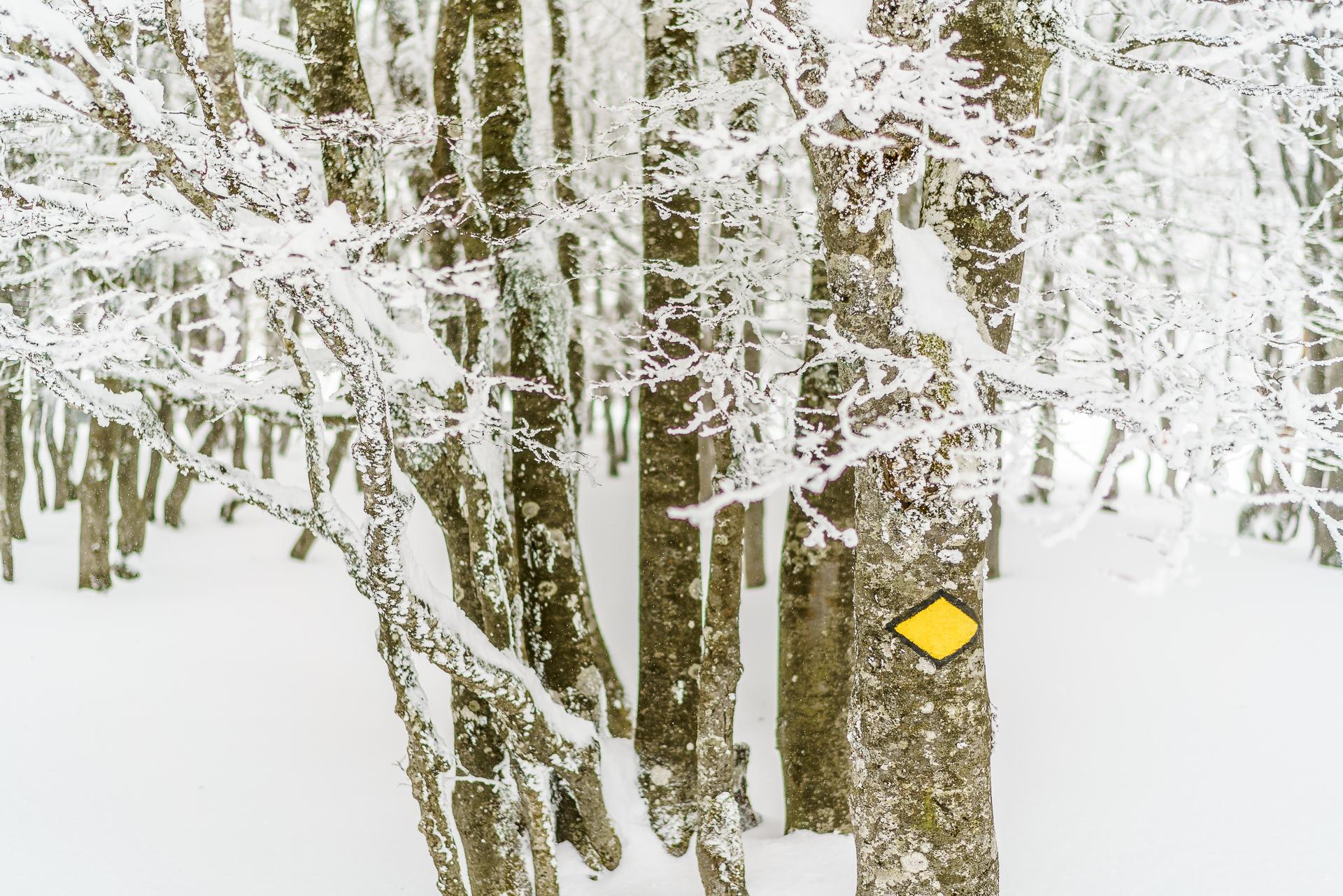 Schneeschuhwandern-Creux-du-Van