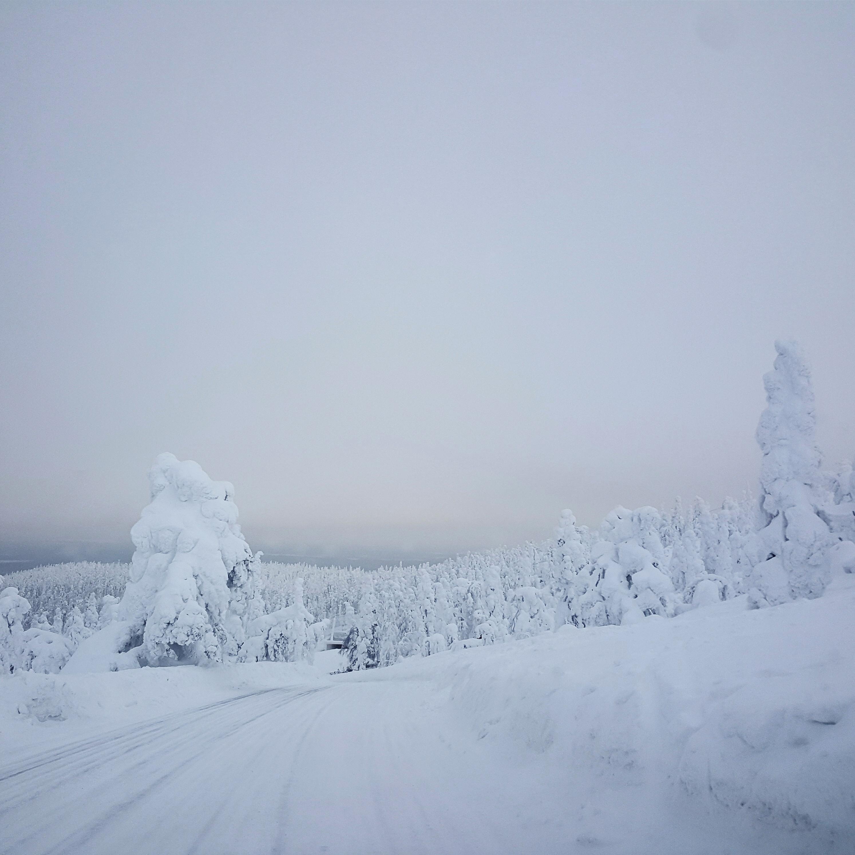 Levi-Winter