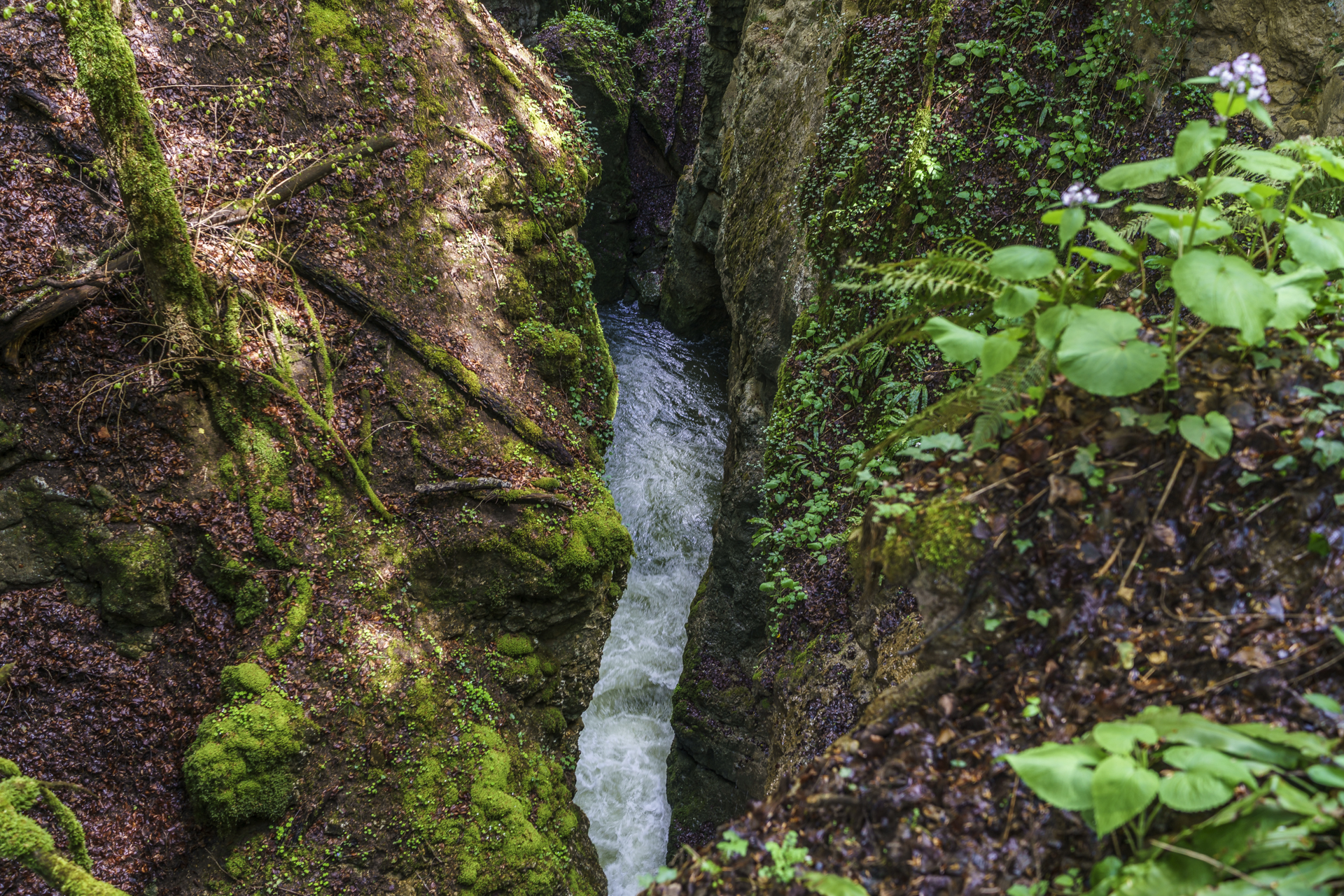 Areuse-Schlucht-Boudry-2