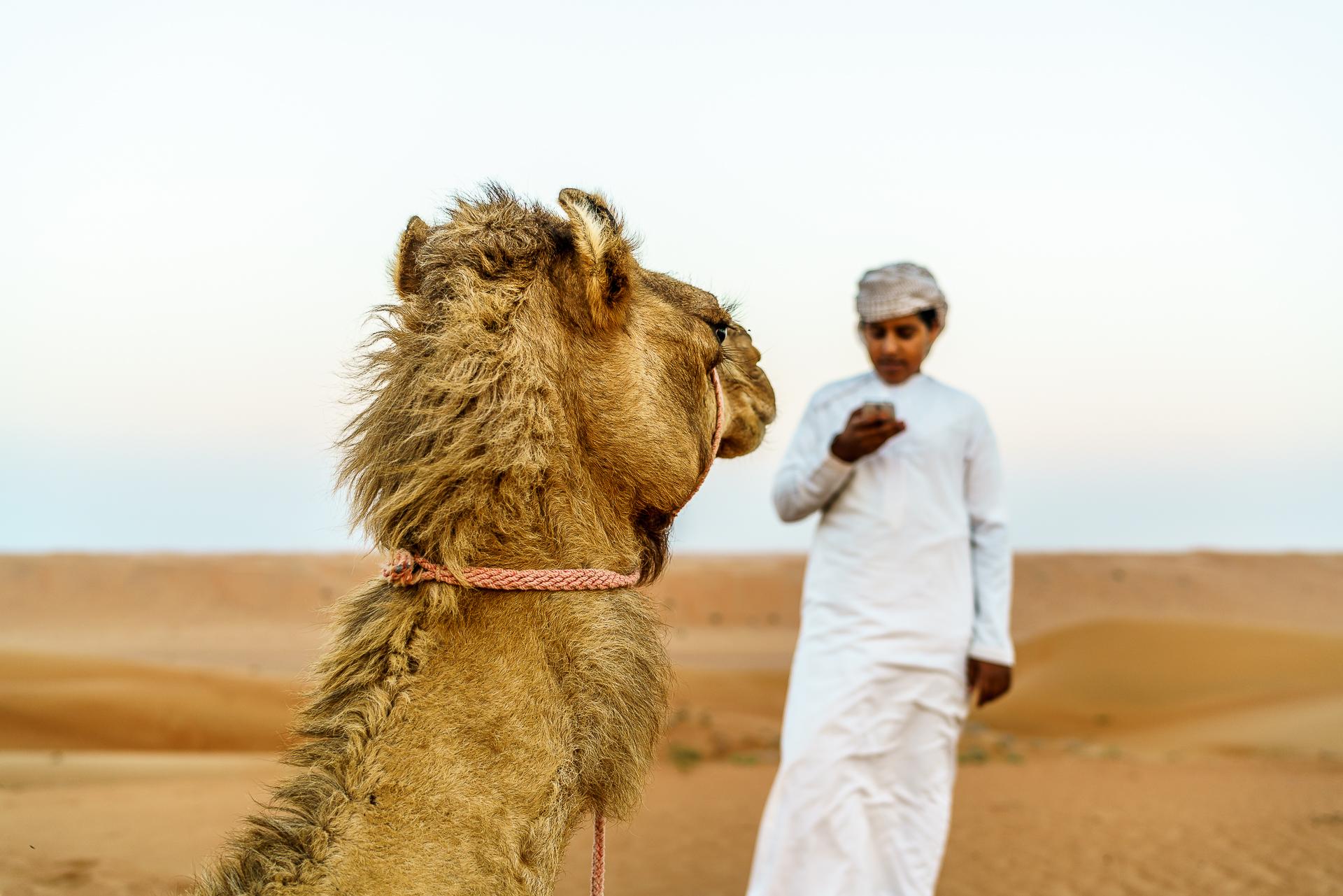 Beduine-Kamel