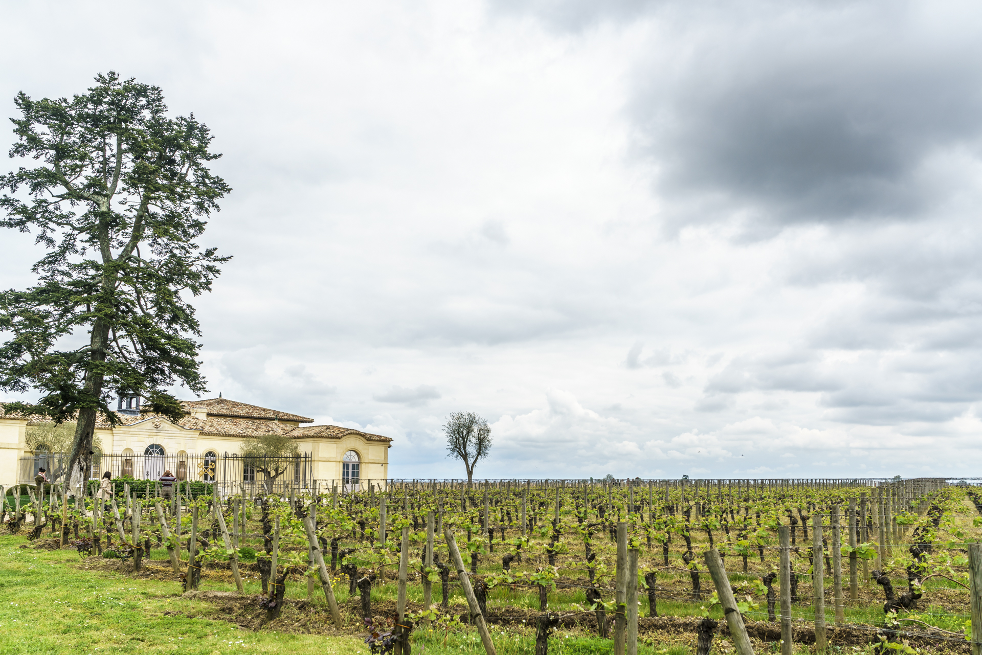 Bordelais-Weingegend