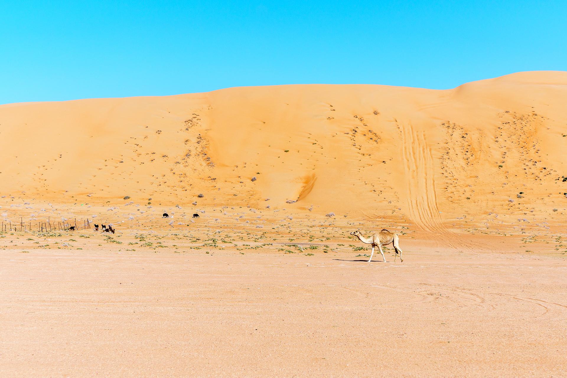 Wahiba-Sands-al-Wasil