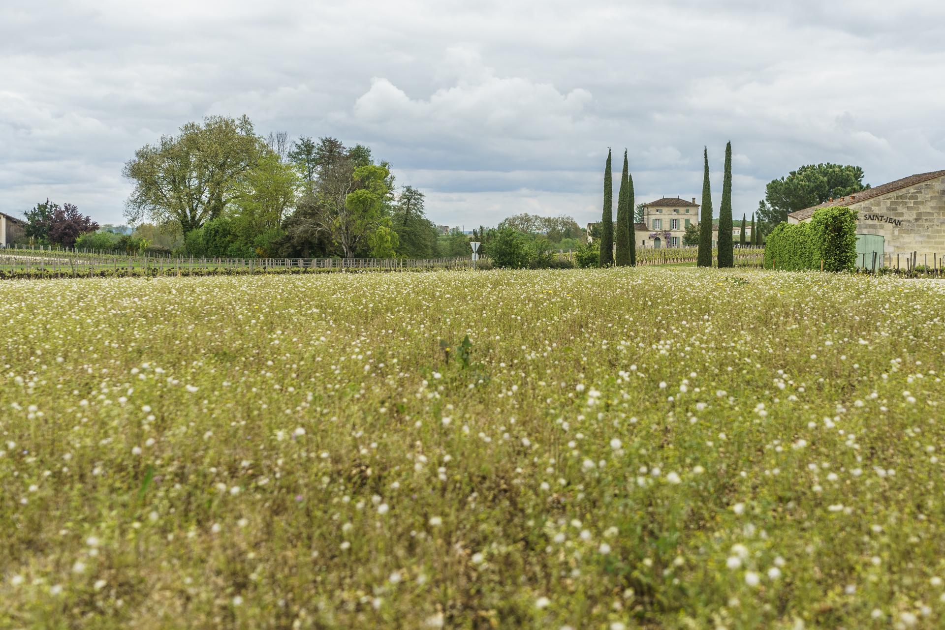 historic-vineyard-landscape-saint-Emilion