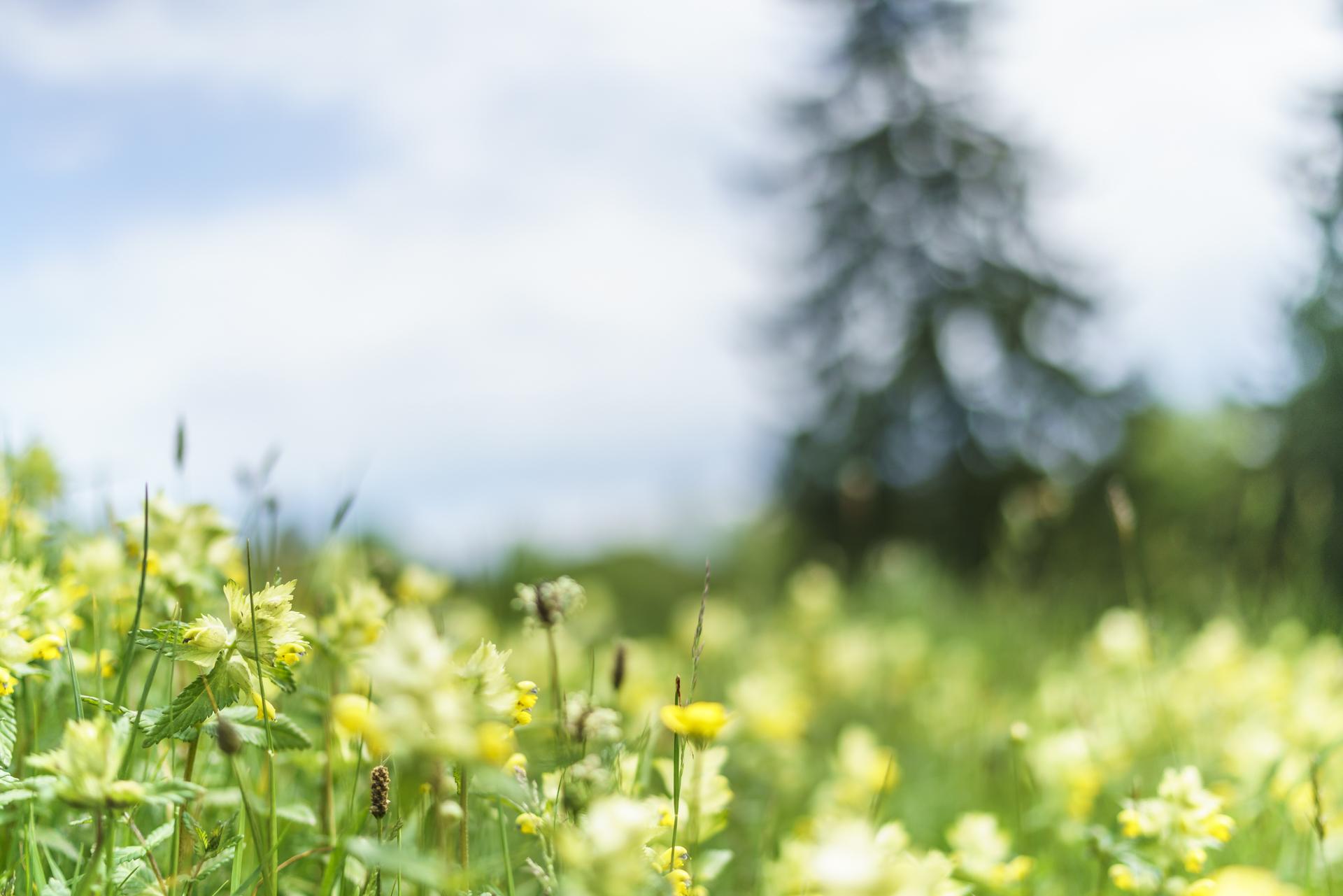 Bergfruehling-Blumen