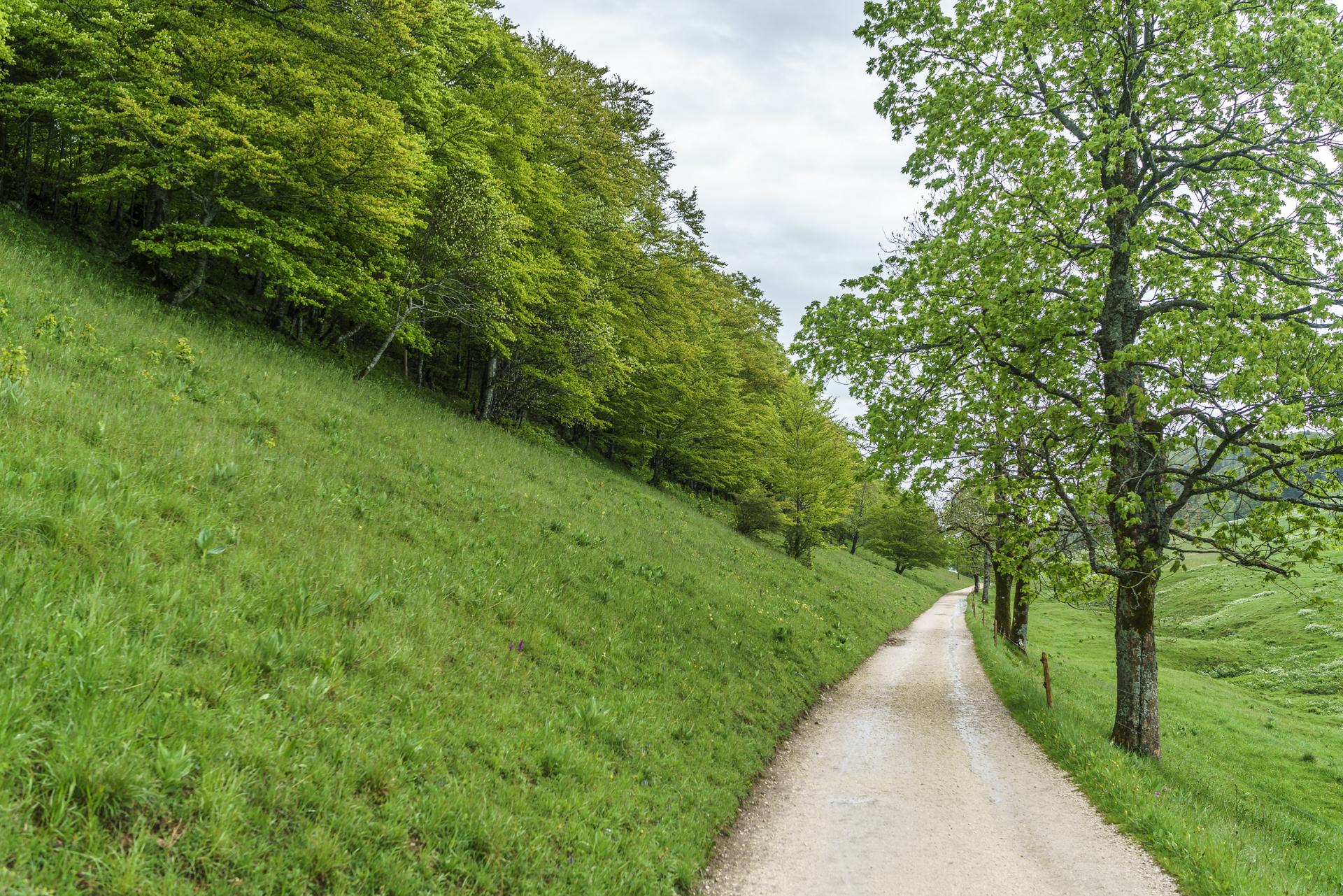 Jura-Hoehenweg-Nr-5