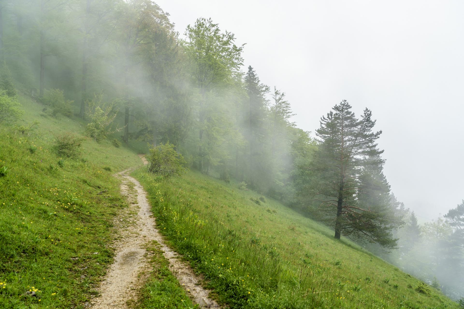 Nebel-Jura-1