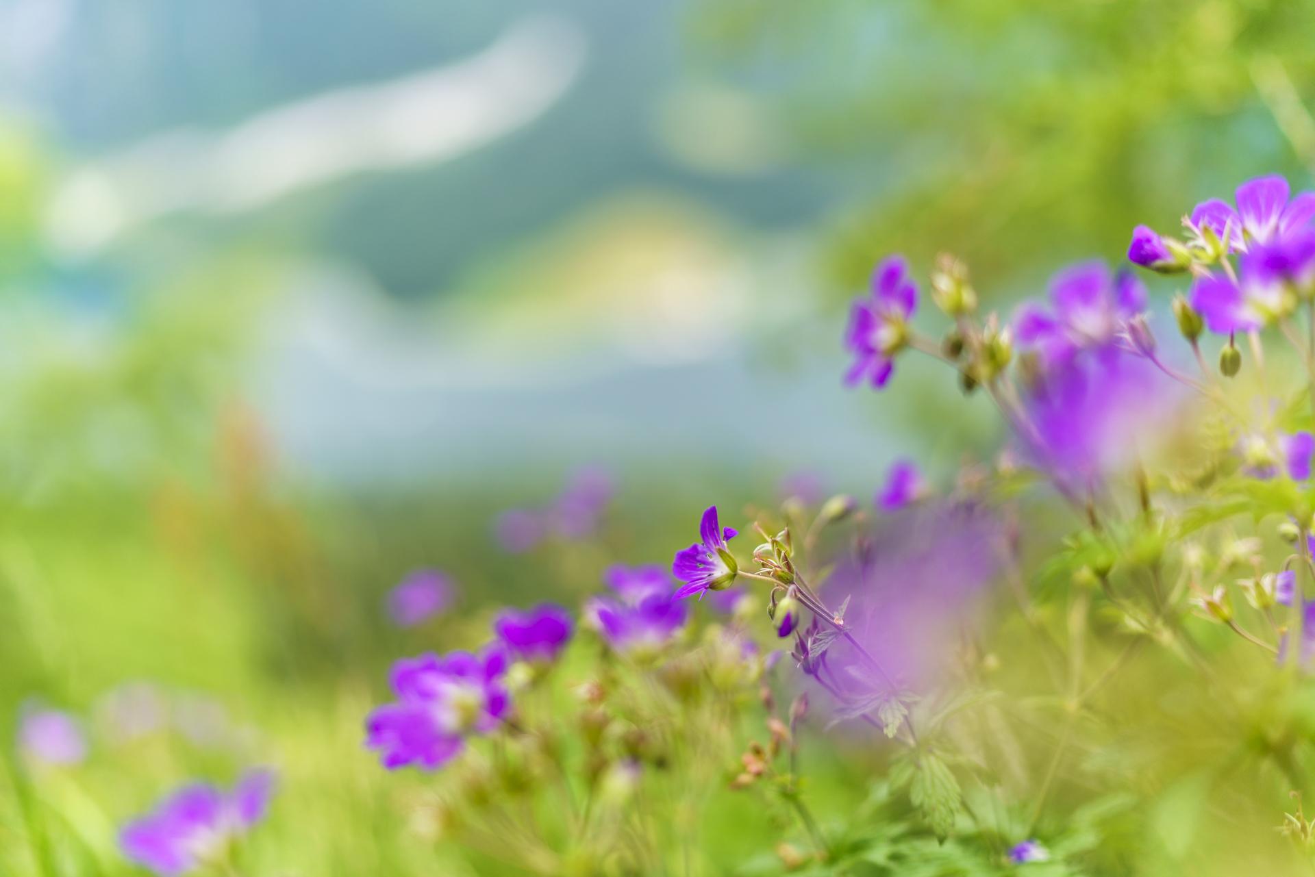 Blumen-Feuerpalven