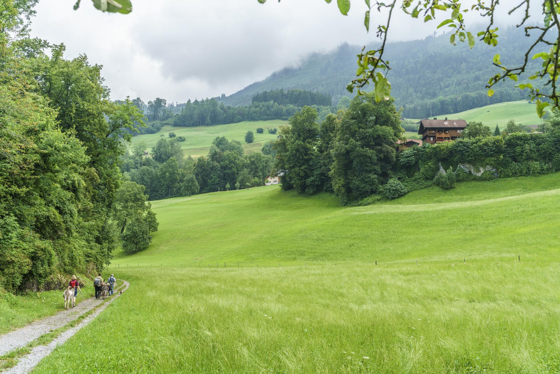 Eseltrekking-Schweiz-Obwalden