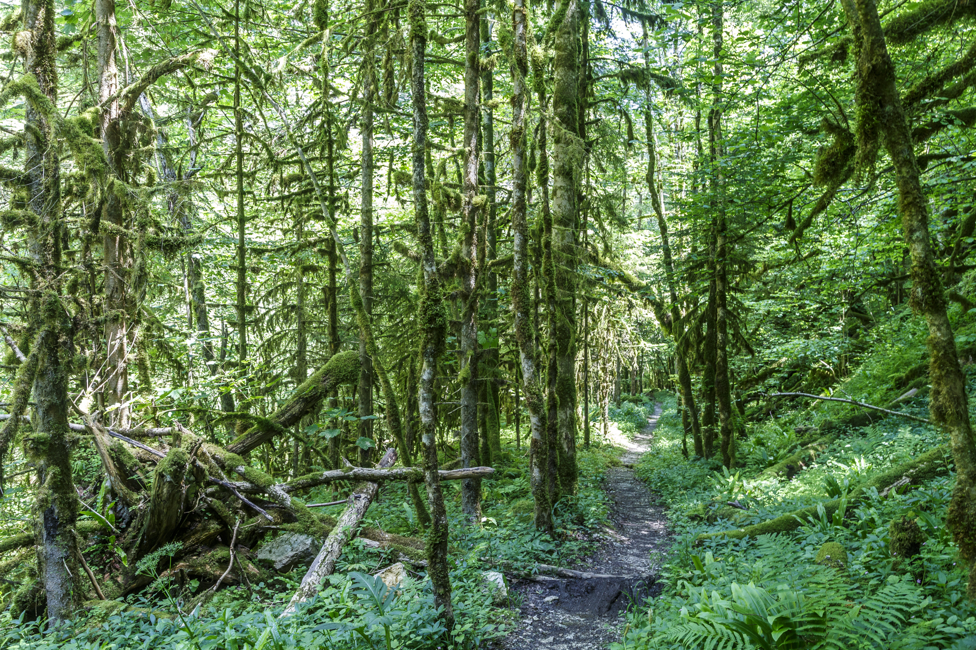 Jura-Wald