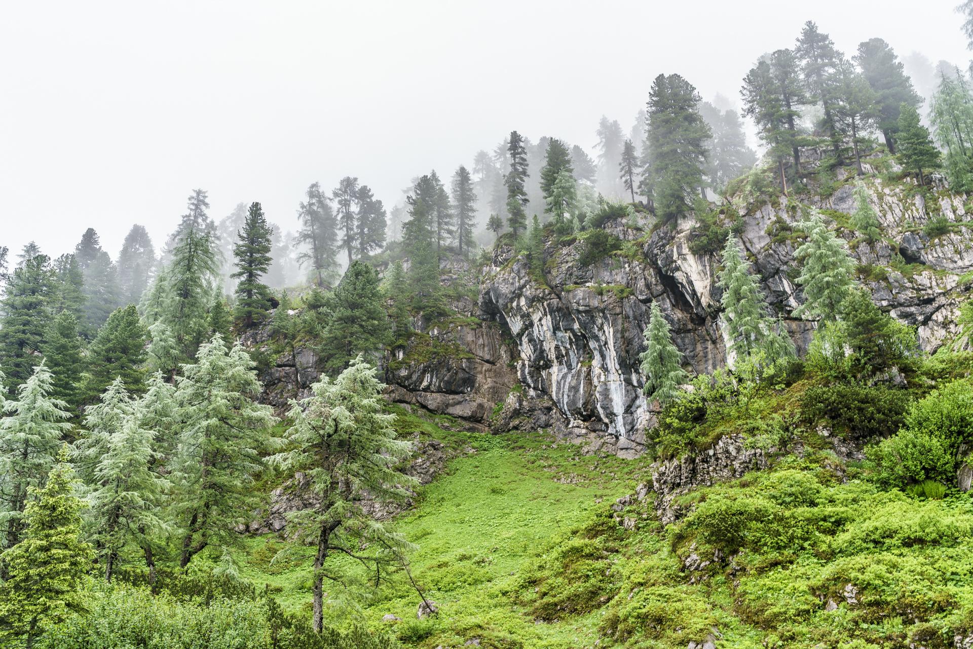 Nebel-Nationalpark-Berchtesgaden