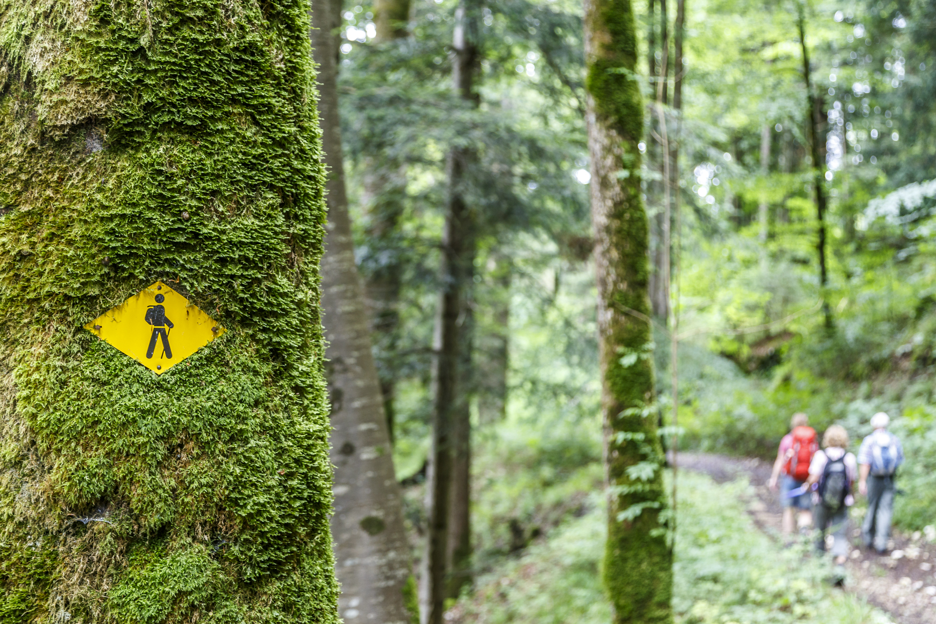 Fil du Doubs Wanderweg Nr 95