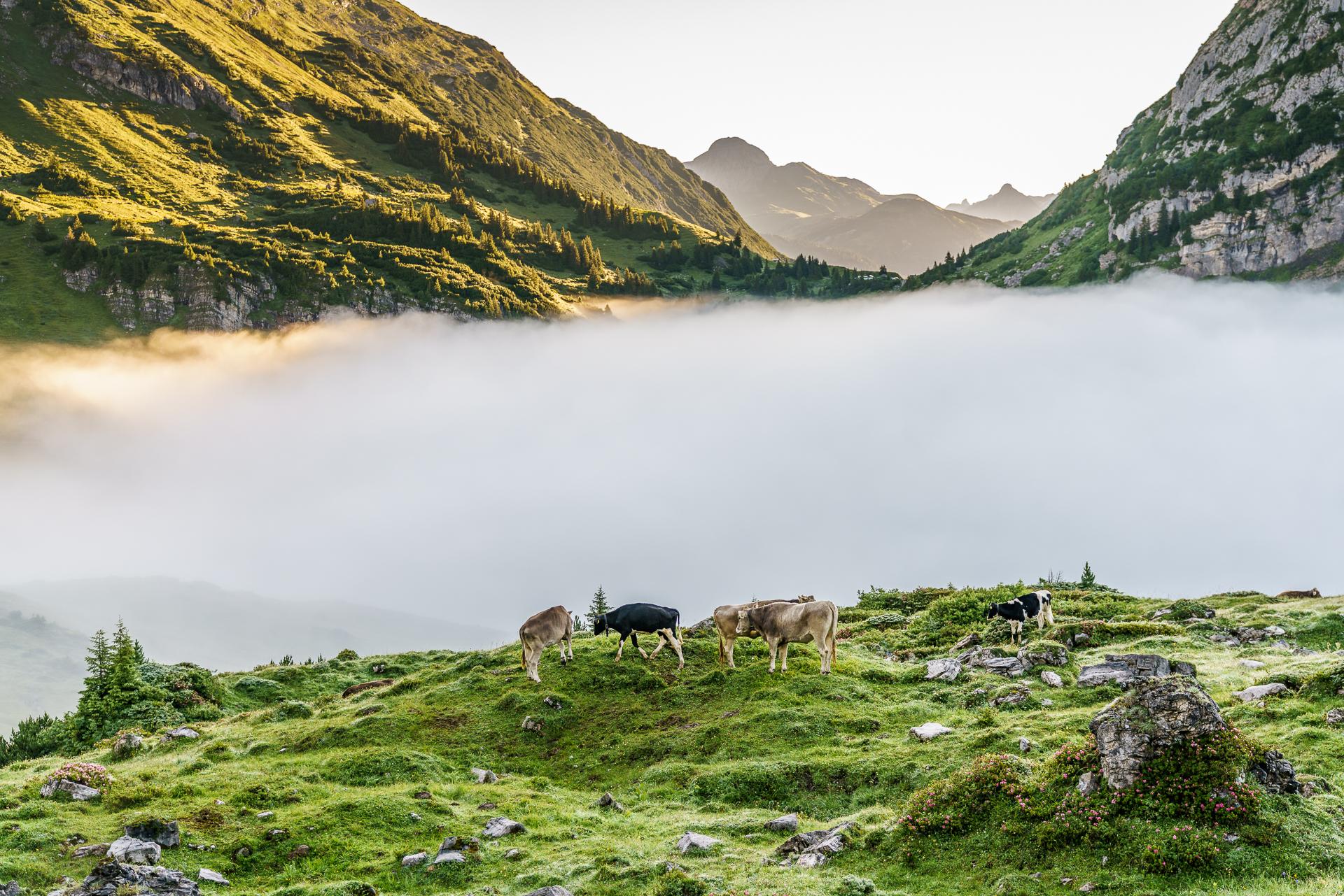 Alp-Nebel