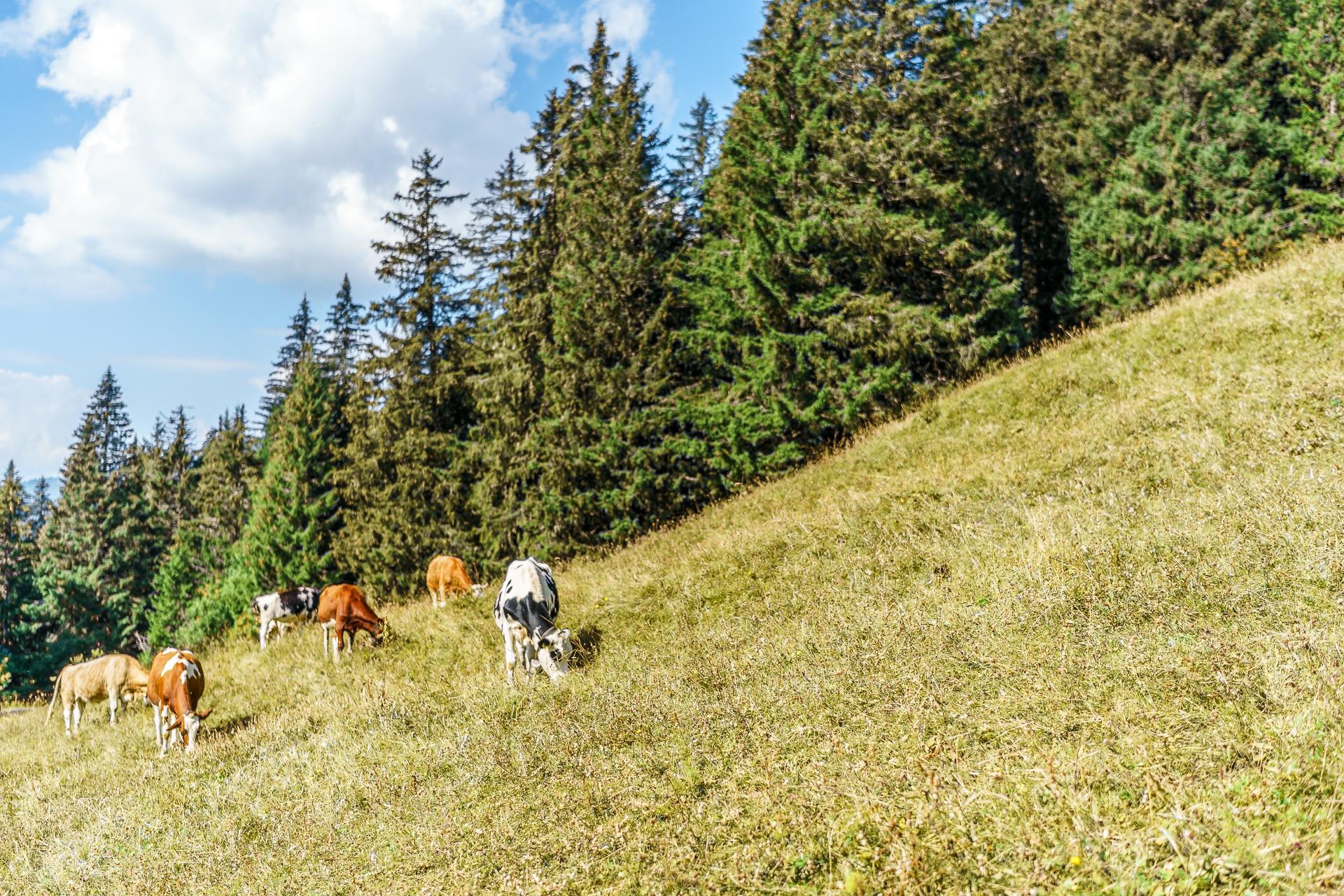 Col-du-Pillon-Alp