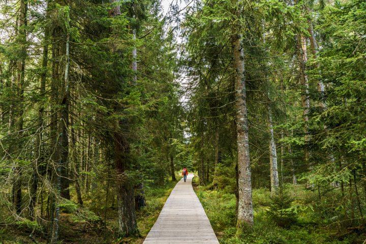 Wie wir im Nördlichen Schwarzwald die Batterien aufluden
