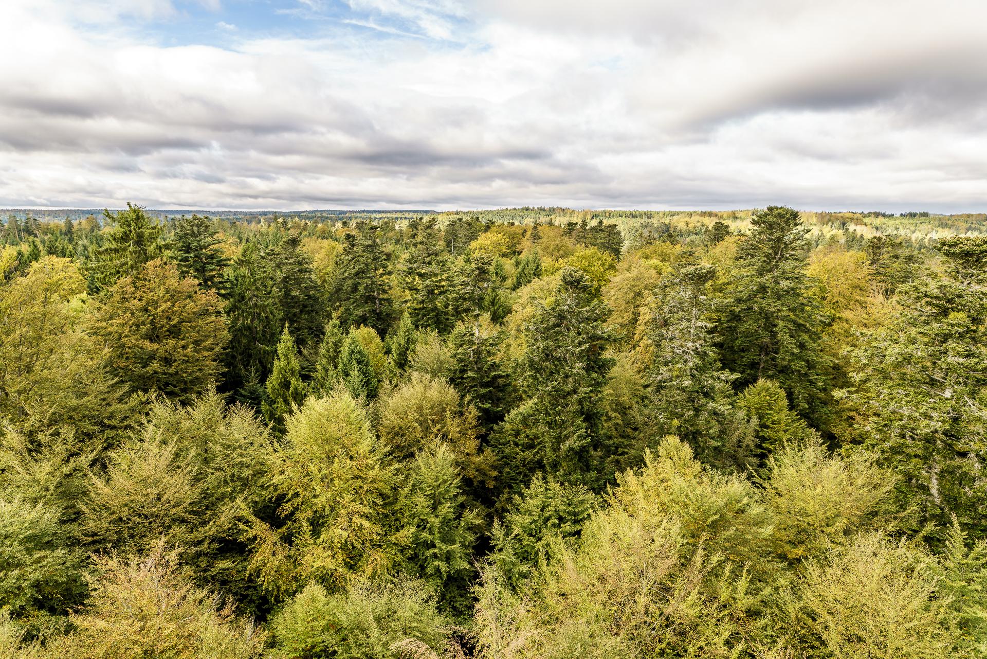 schwarzwald-herbst
