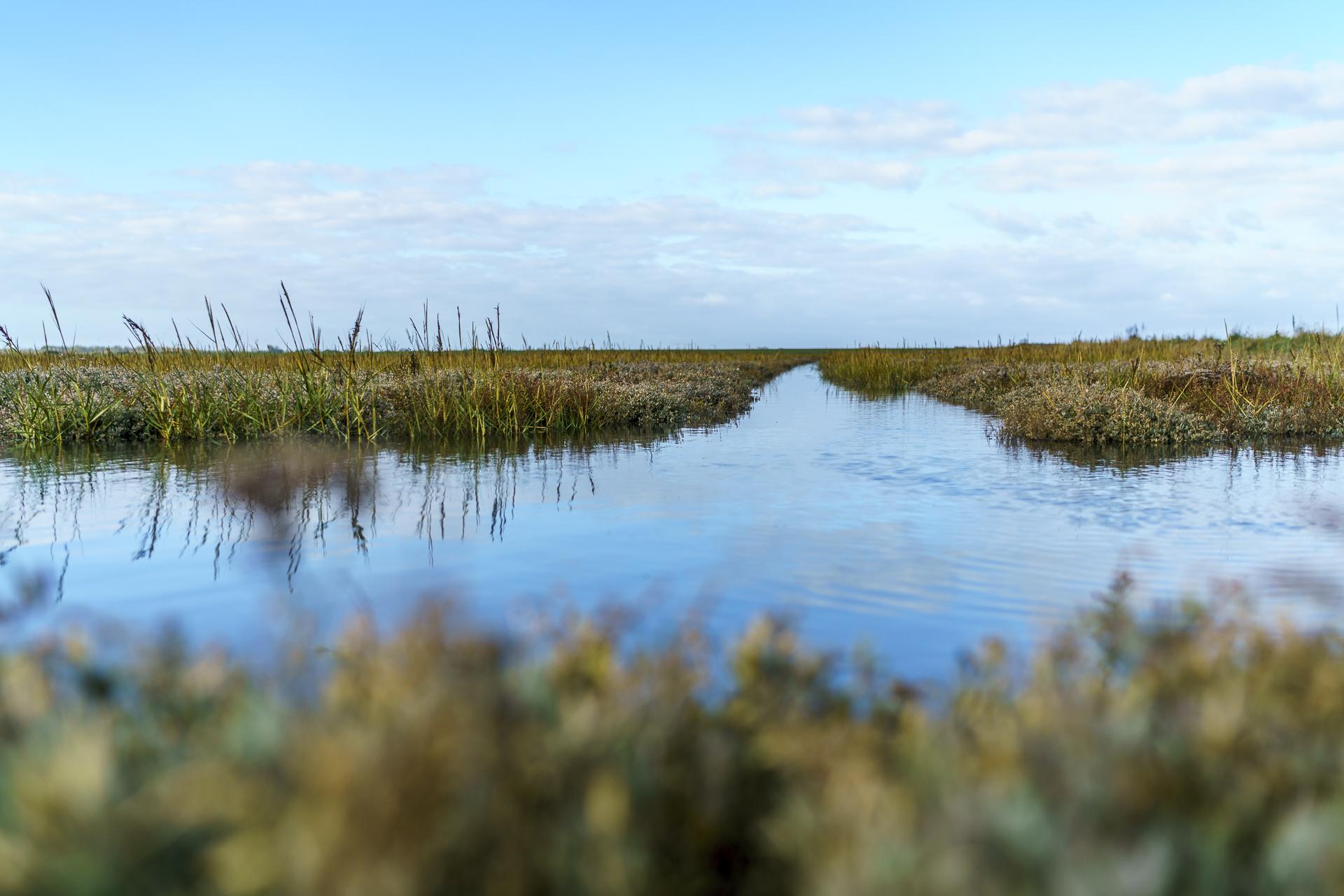 priel-salzwiesen-langeoog