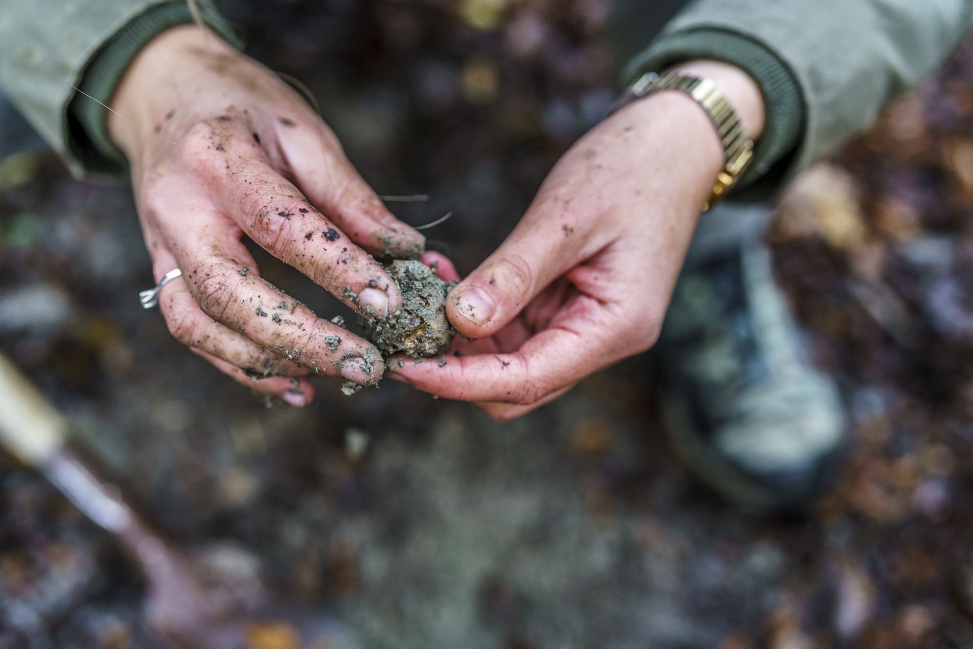 prodan-tartufi-truffle-hunting