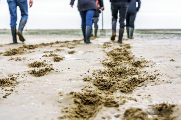 Ein Date mit dem Wattwurm: Auszeit auf Spiekeroog