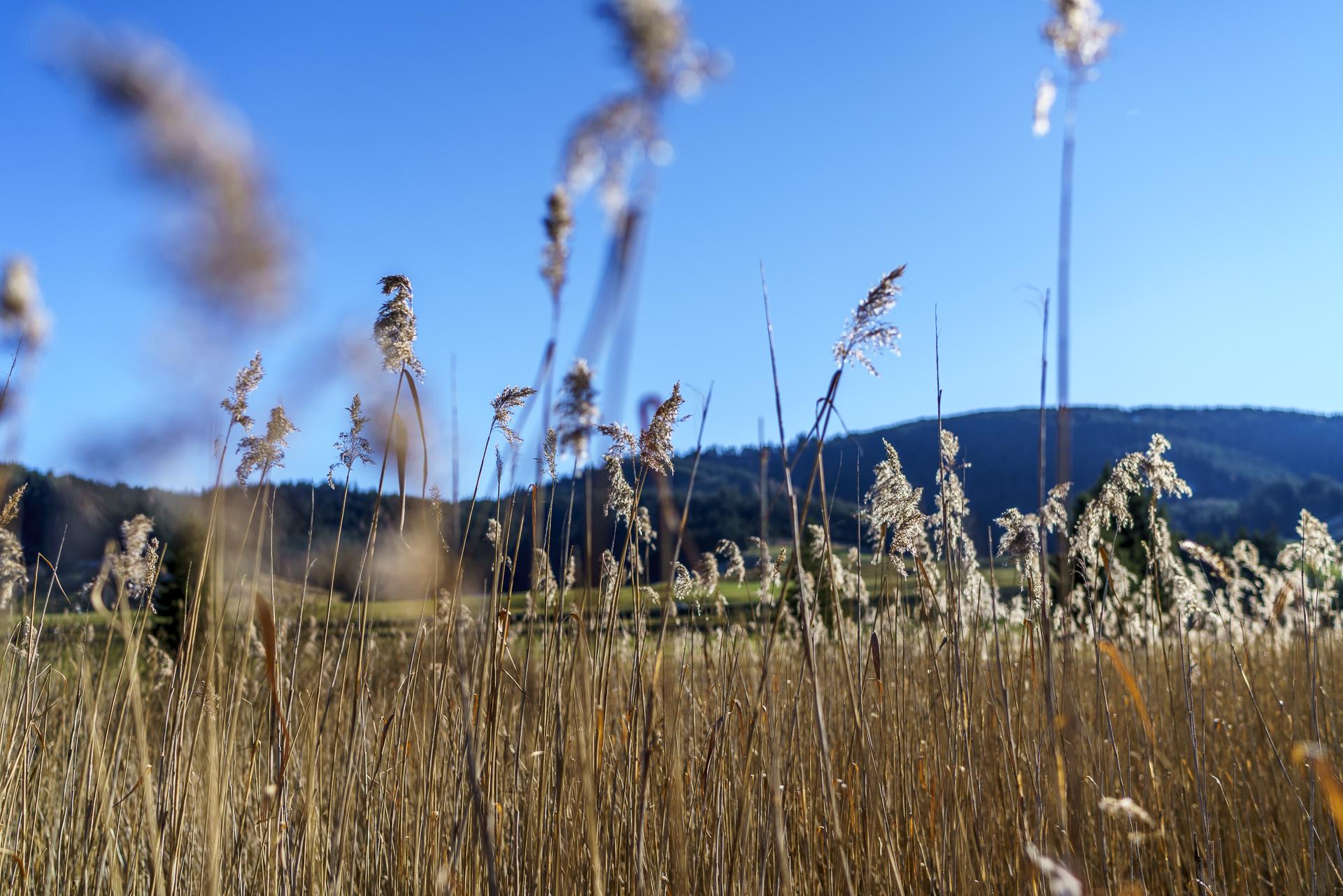 Rothenthurm Moor Vegetation