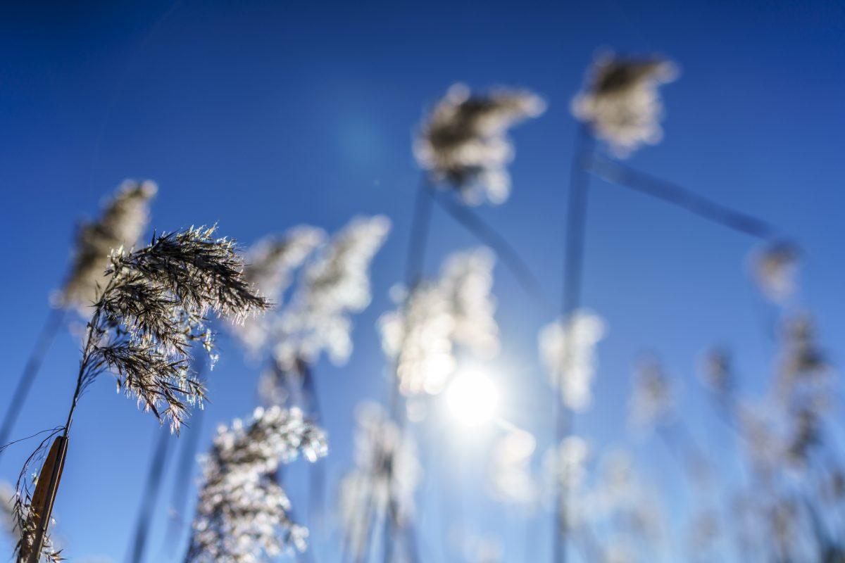 Raus an die frische Luft: Moorweg Rothenthurm