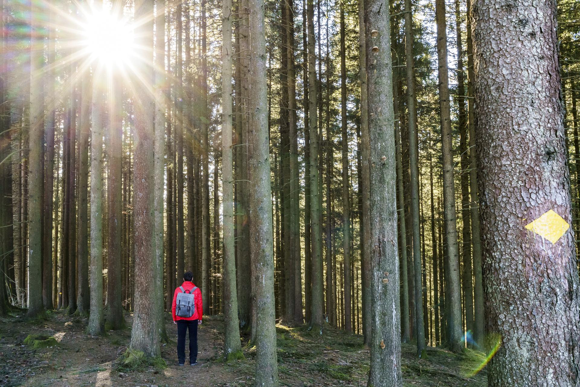 Sonnenstrahlen Wald
