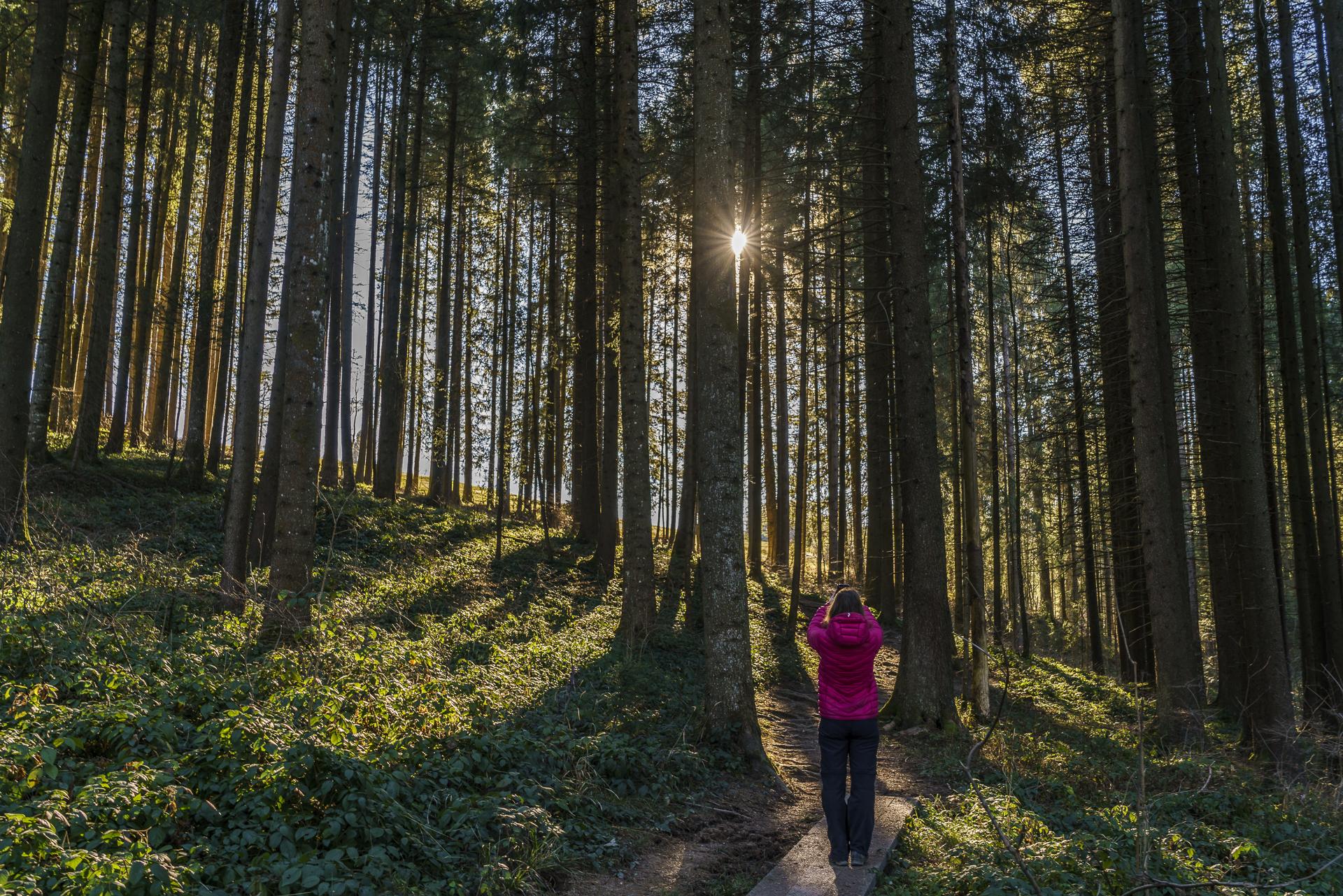 Herbstsonne im Wald