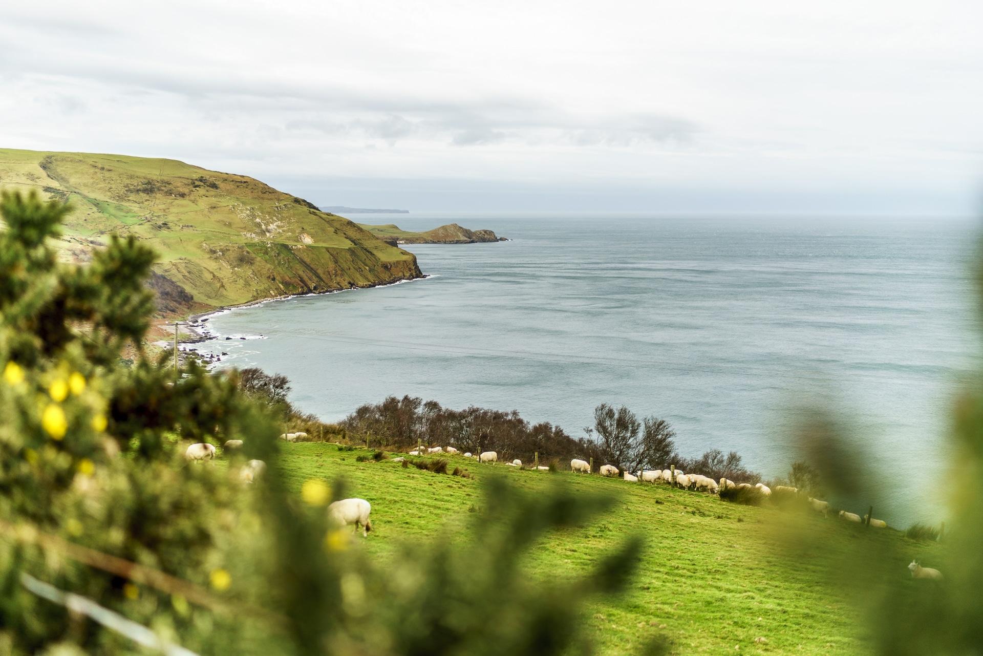 Nordirland Kueste