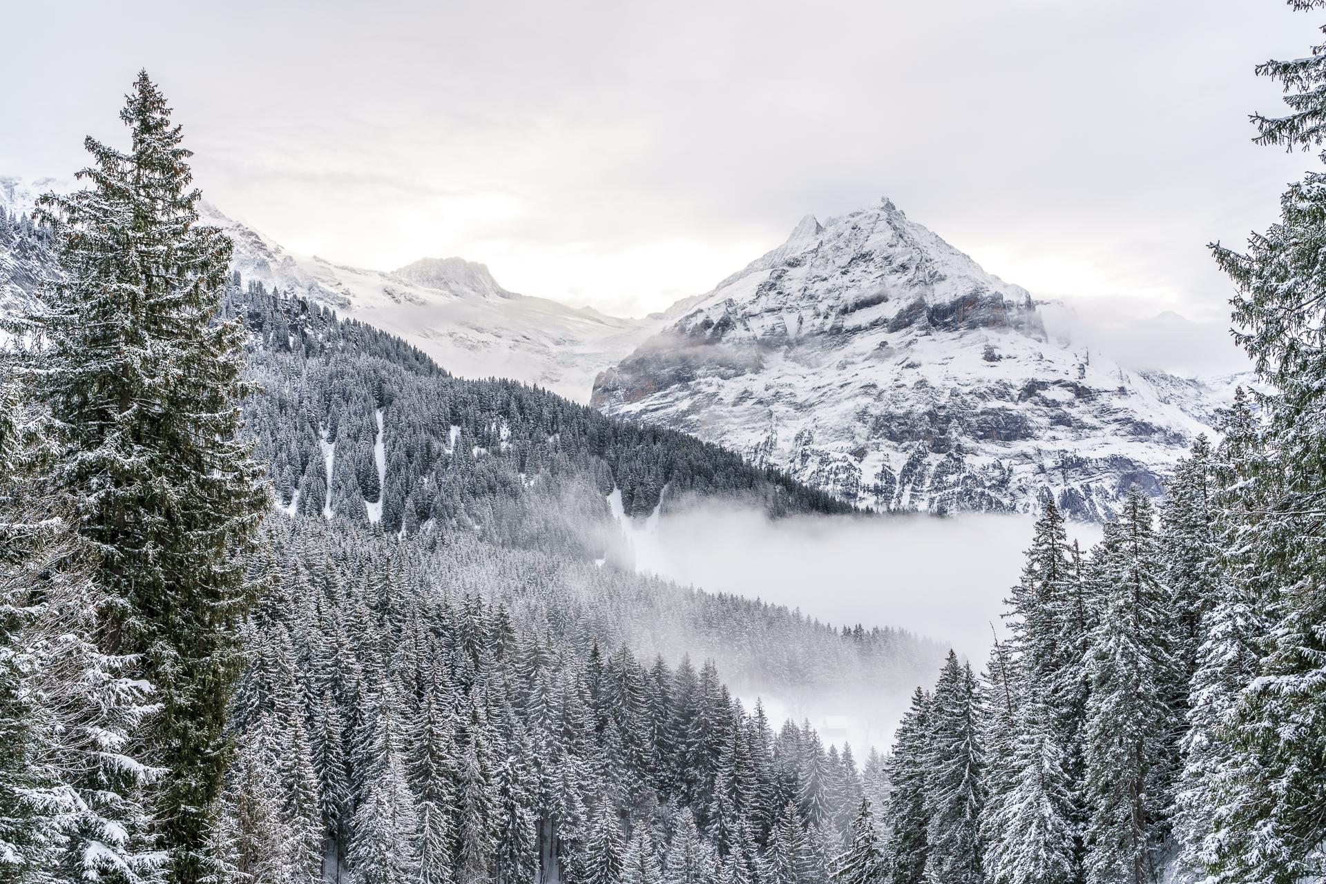 Wetterhorn Grindelwald