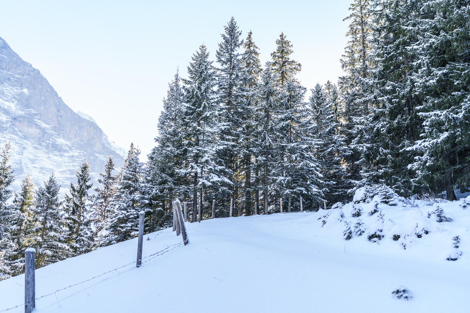 Schneeschuhtrail in Grindelwald
