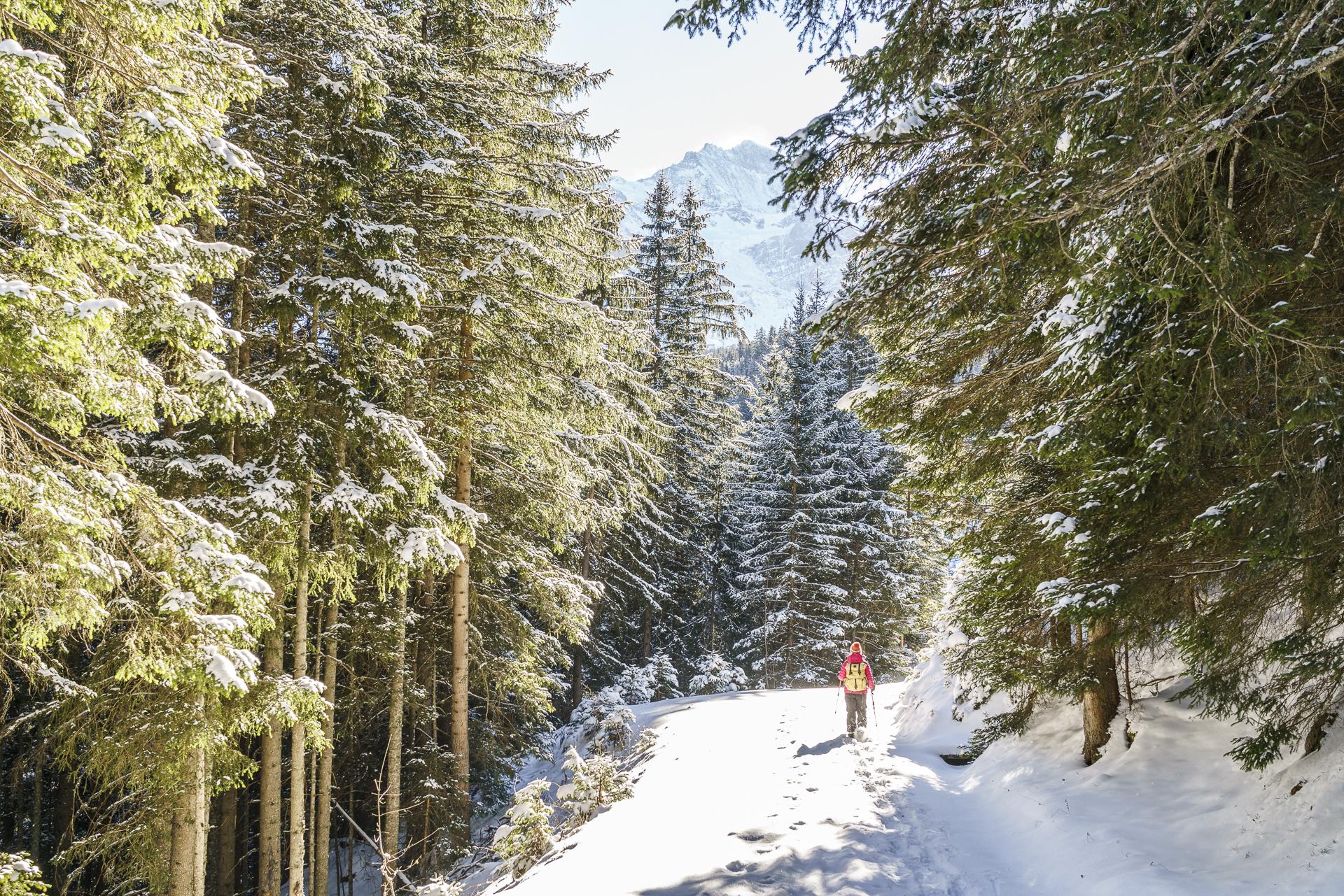 Scheeschuhwandern in Grindelwald