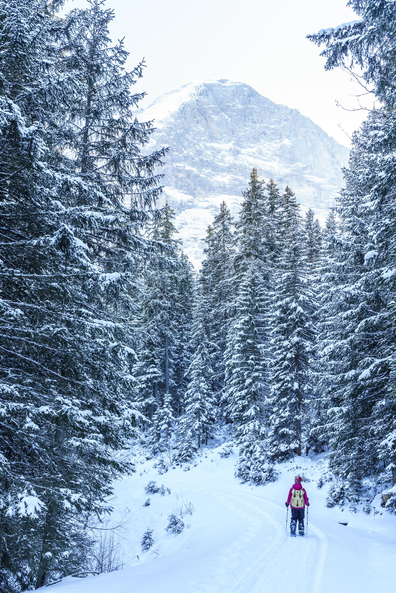 Eigernordwand und verschneiter Wald