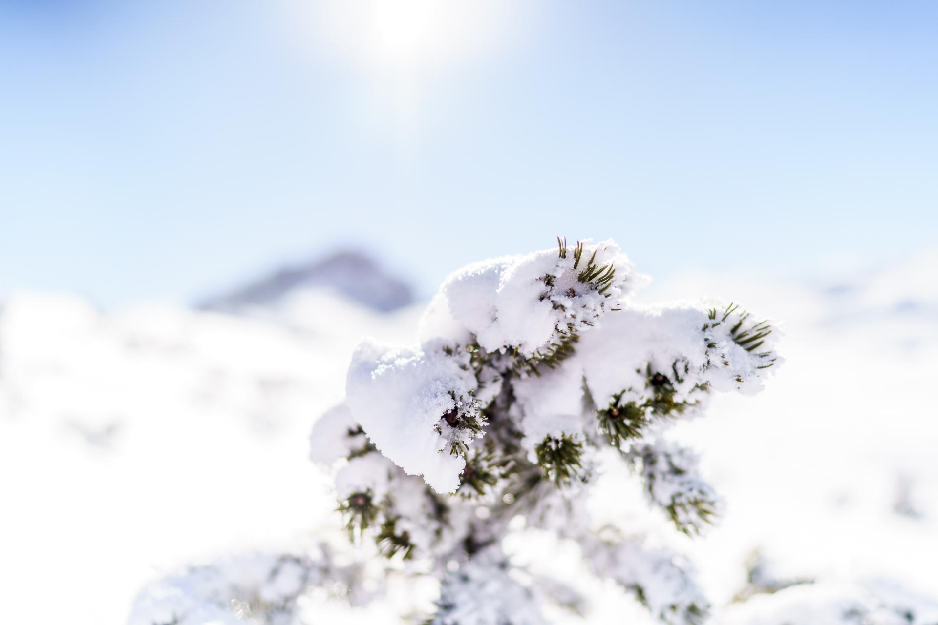 Tannenzweig Makroaufnahme Winter