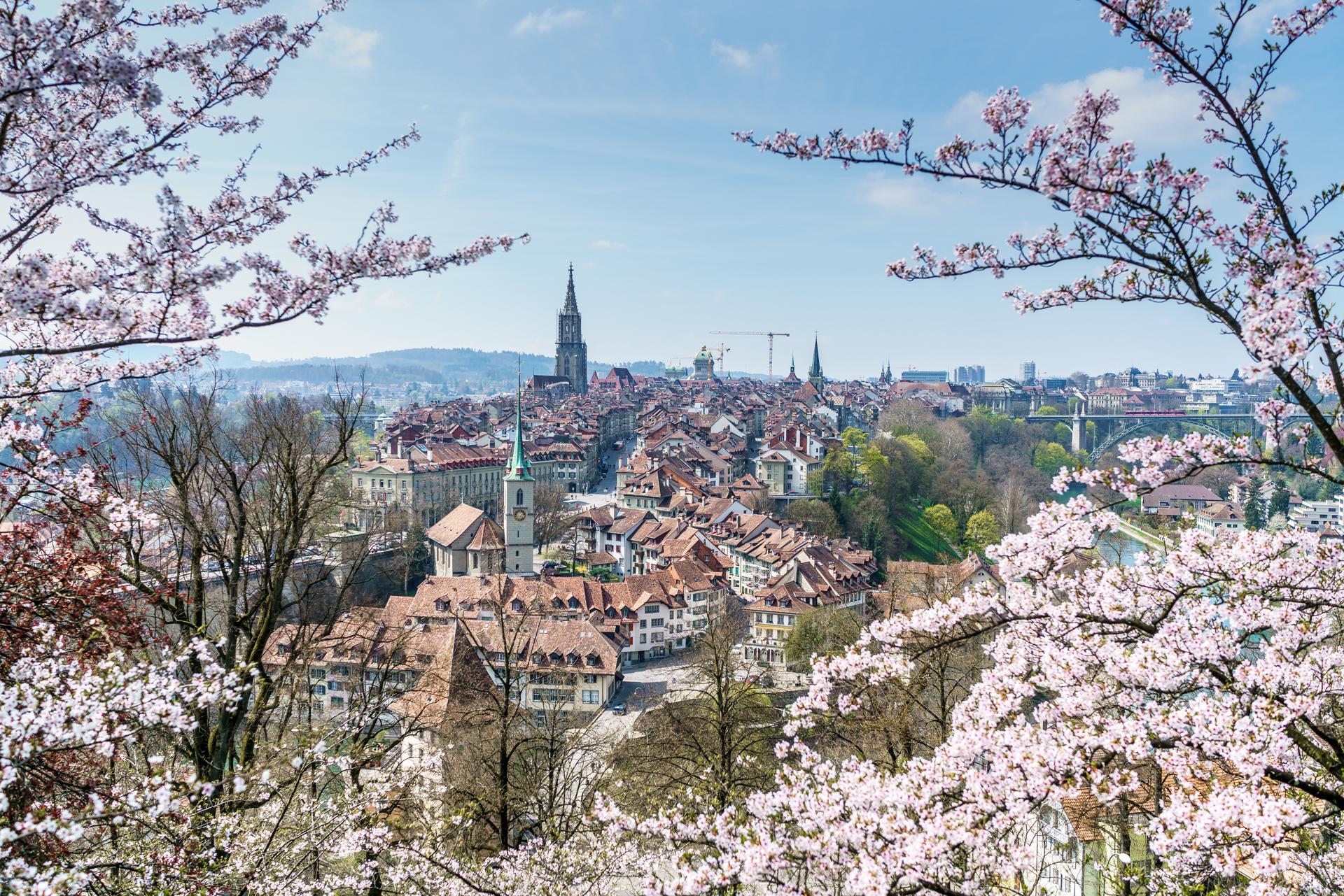 Bern Rosengarten Kirschblüte