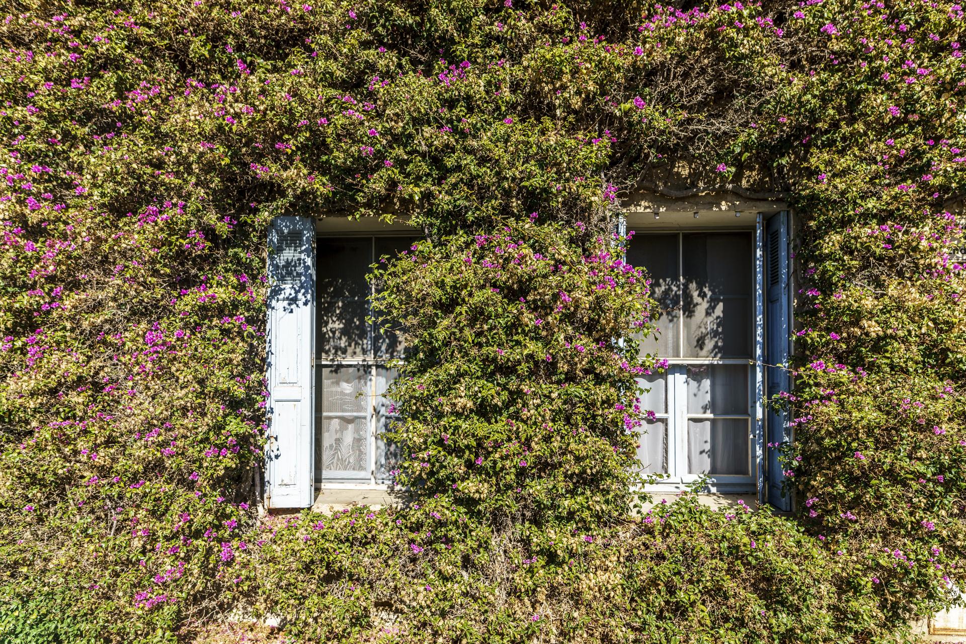 Bormes Blumenfenster