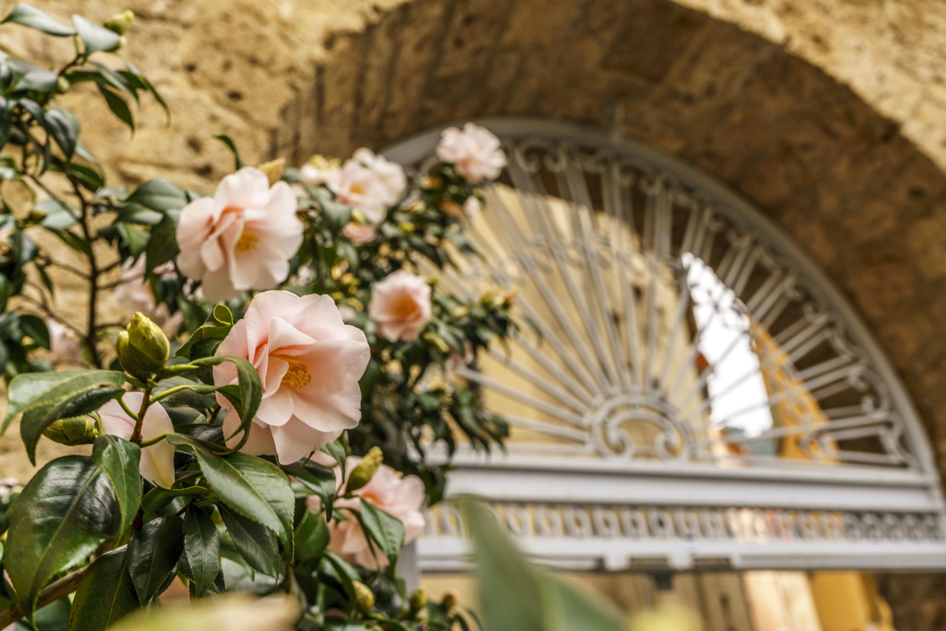 Grasse Altstadt Blumen