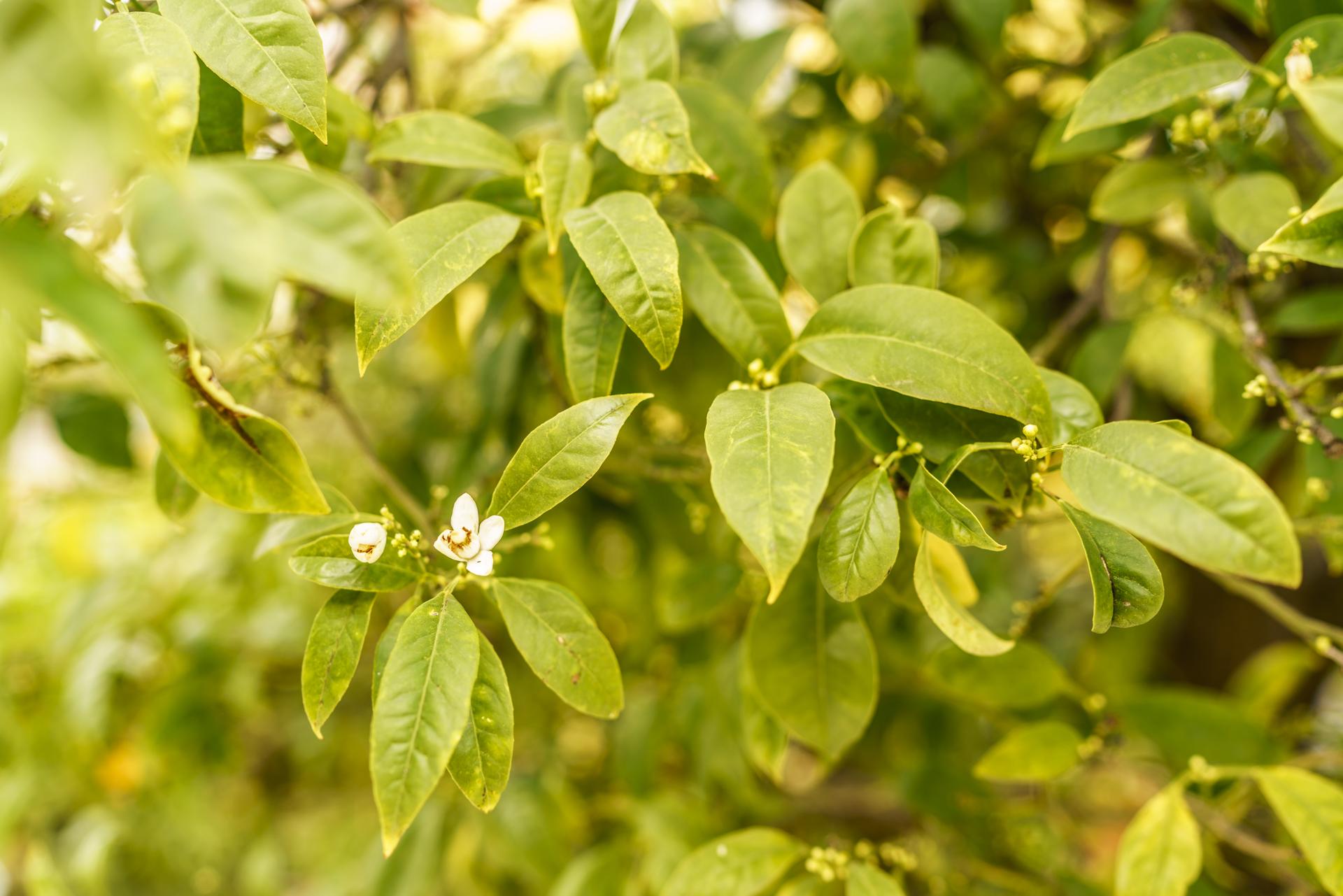 Grasse Pflanzen im Parfümmuseum