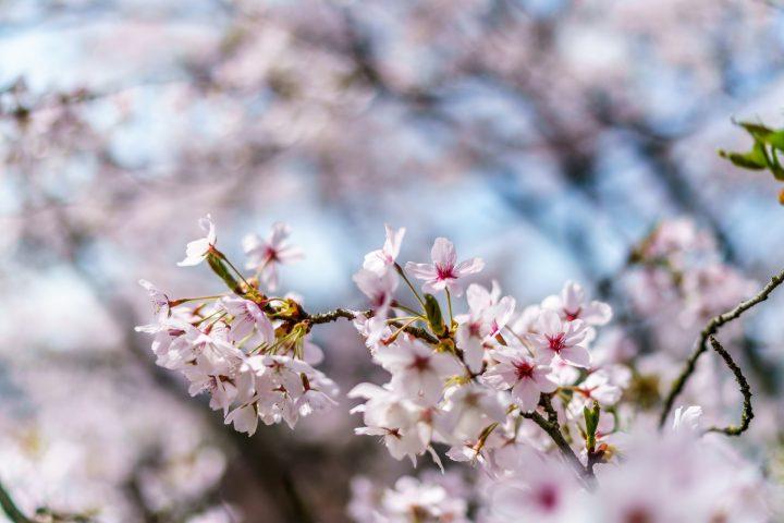 10 Ausflugstipps für garantierte Frühlingsgefühle